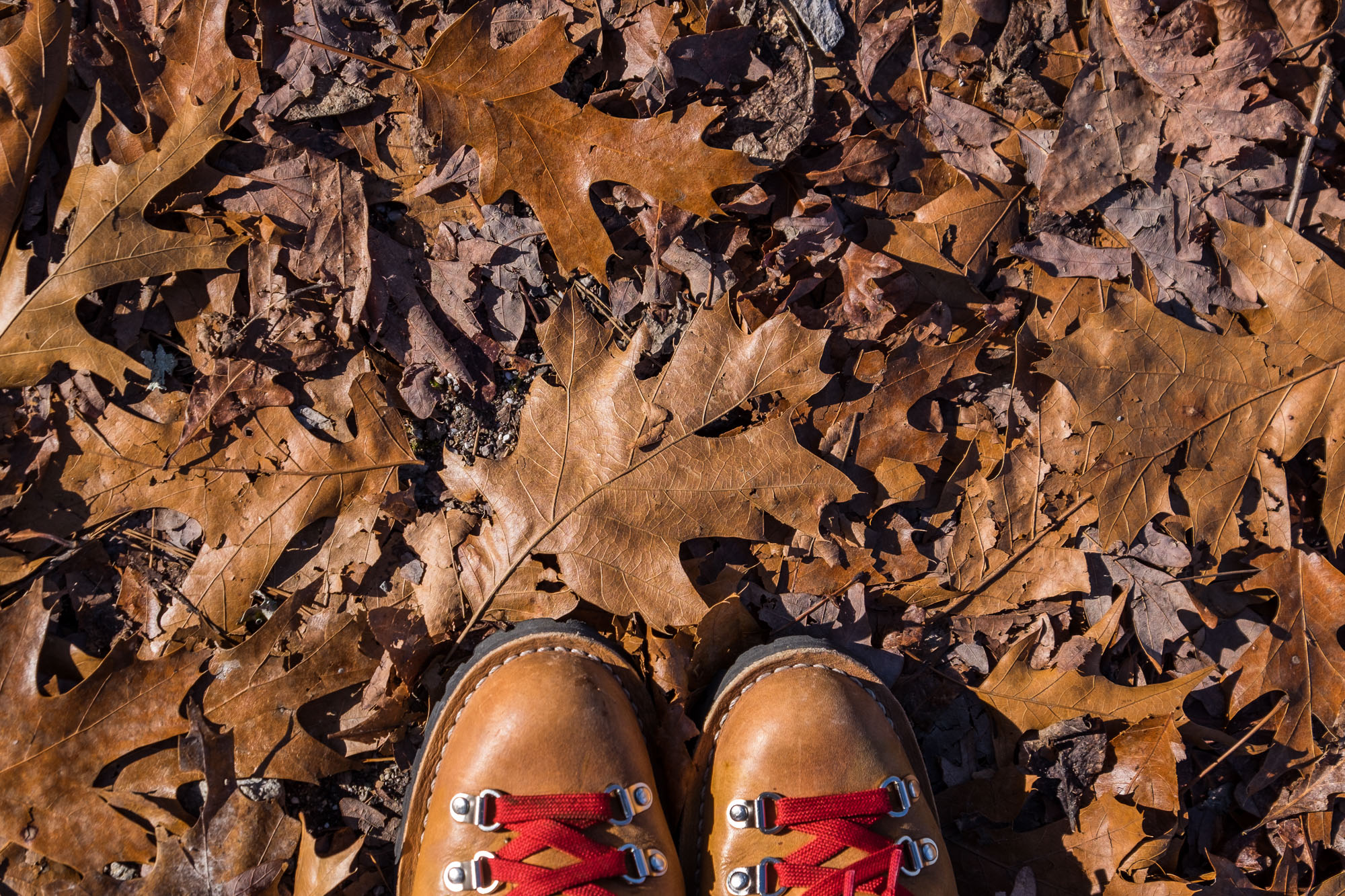 Brown leaves and brown leather boots. And red laces. I love this photo Stef took.