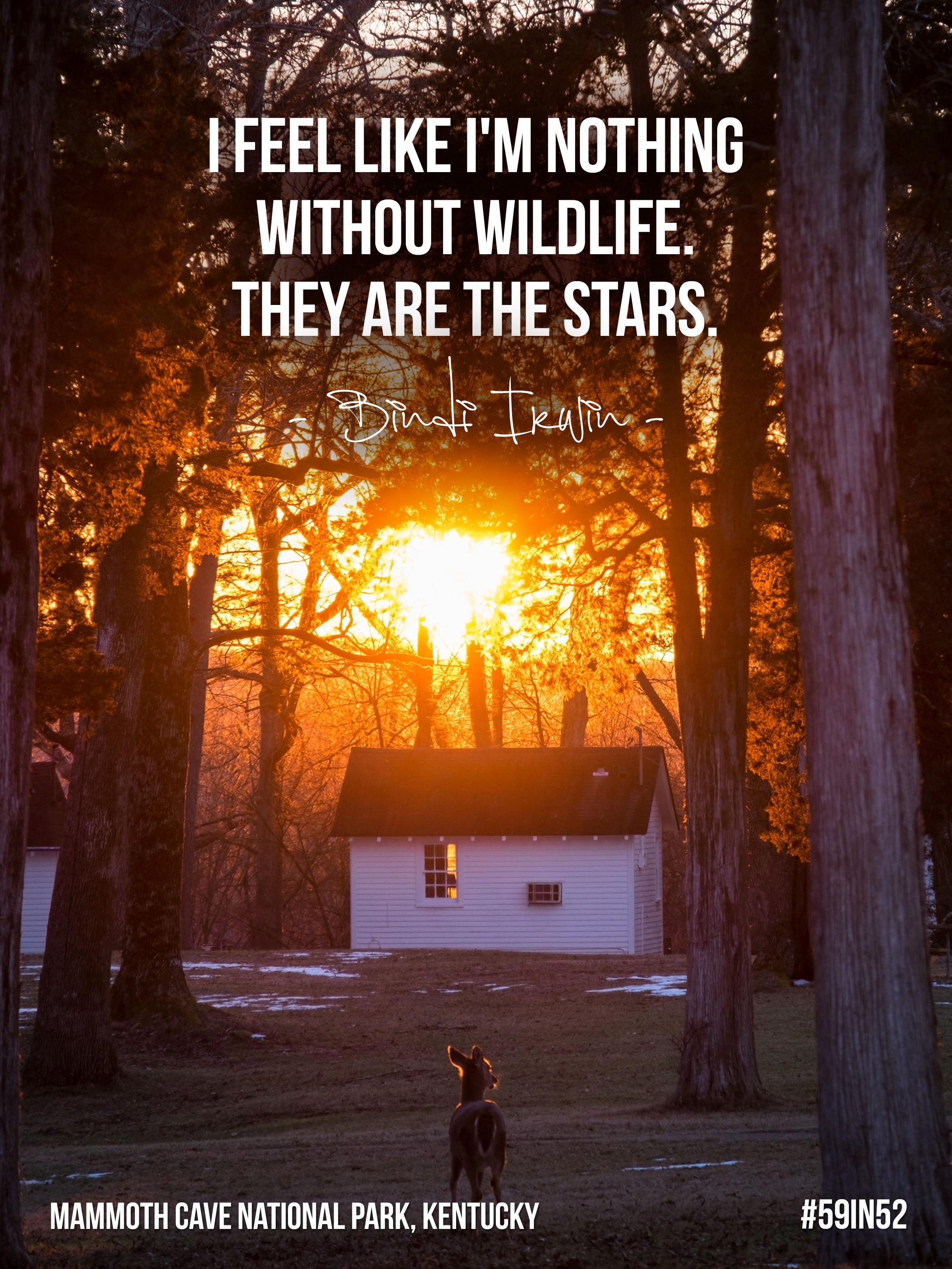 """I feel like I am nothing without wildlife. They are the stars."" Bindi Irwin"