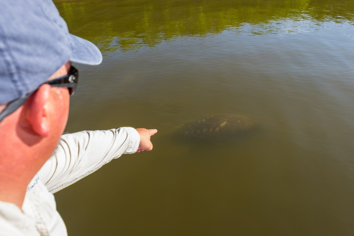 Soptting a manatee in Everglades National Park