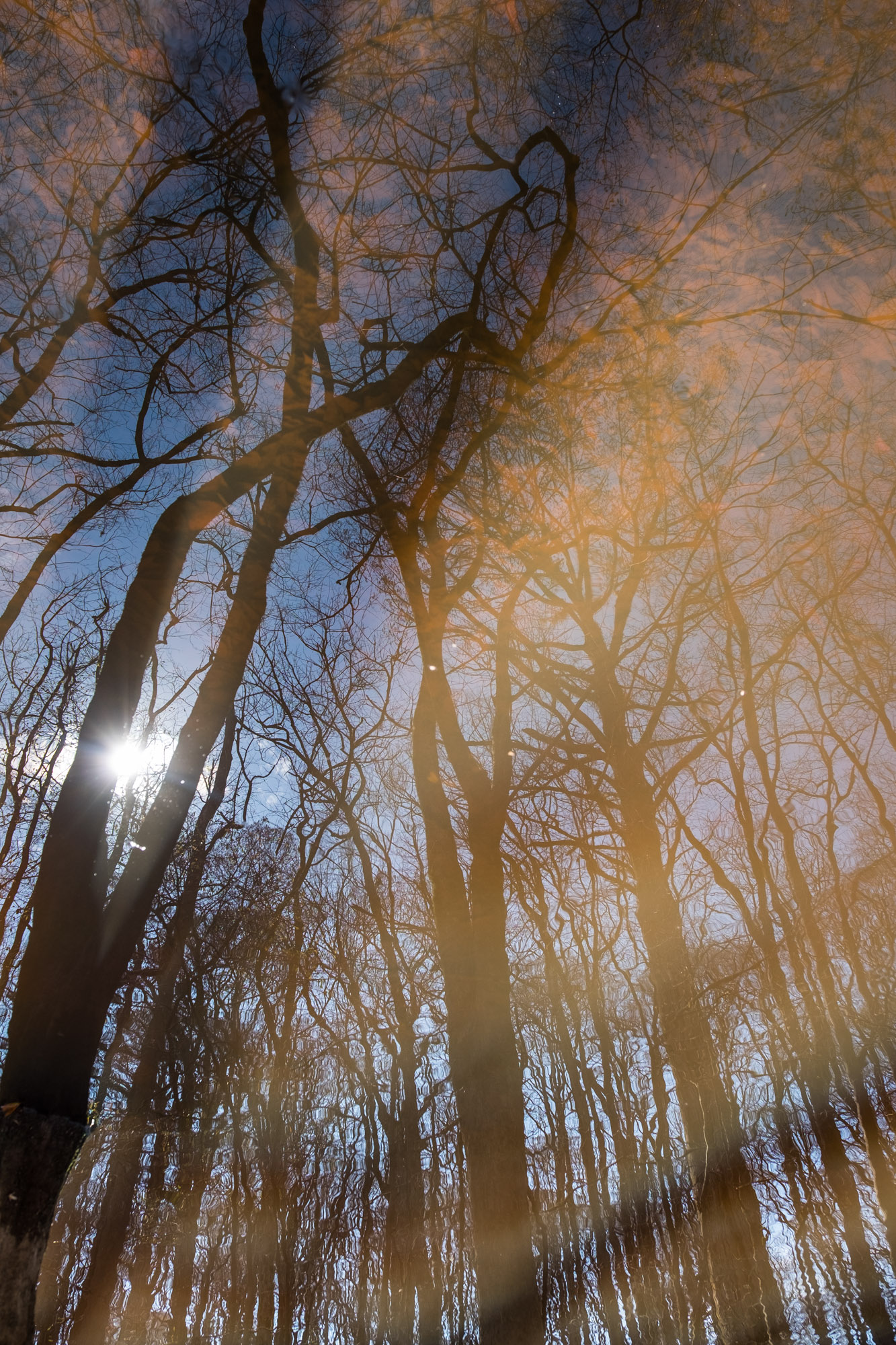 Reflected trees.