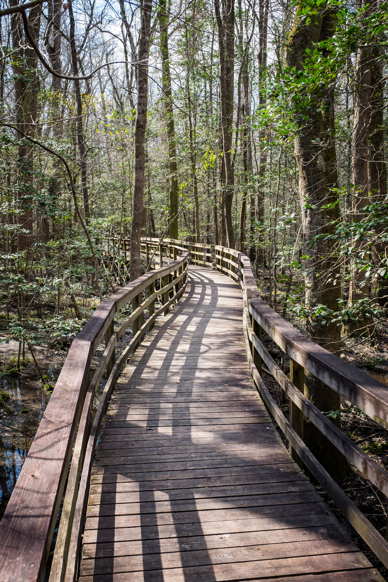 Most people will walk the elevated boardwalk, which is a 2.4 mile loop.
