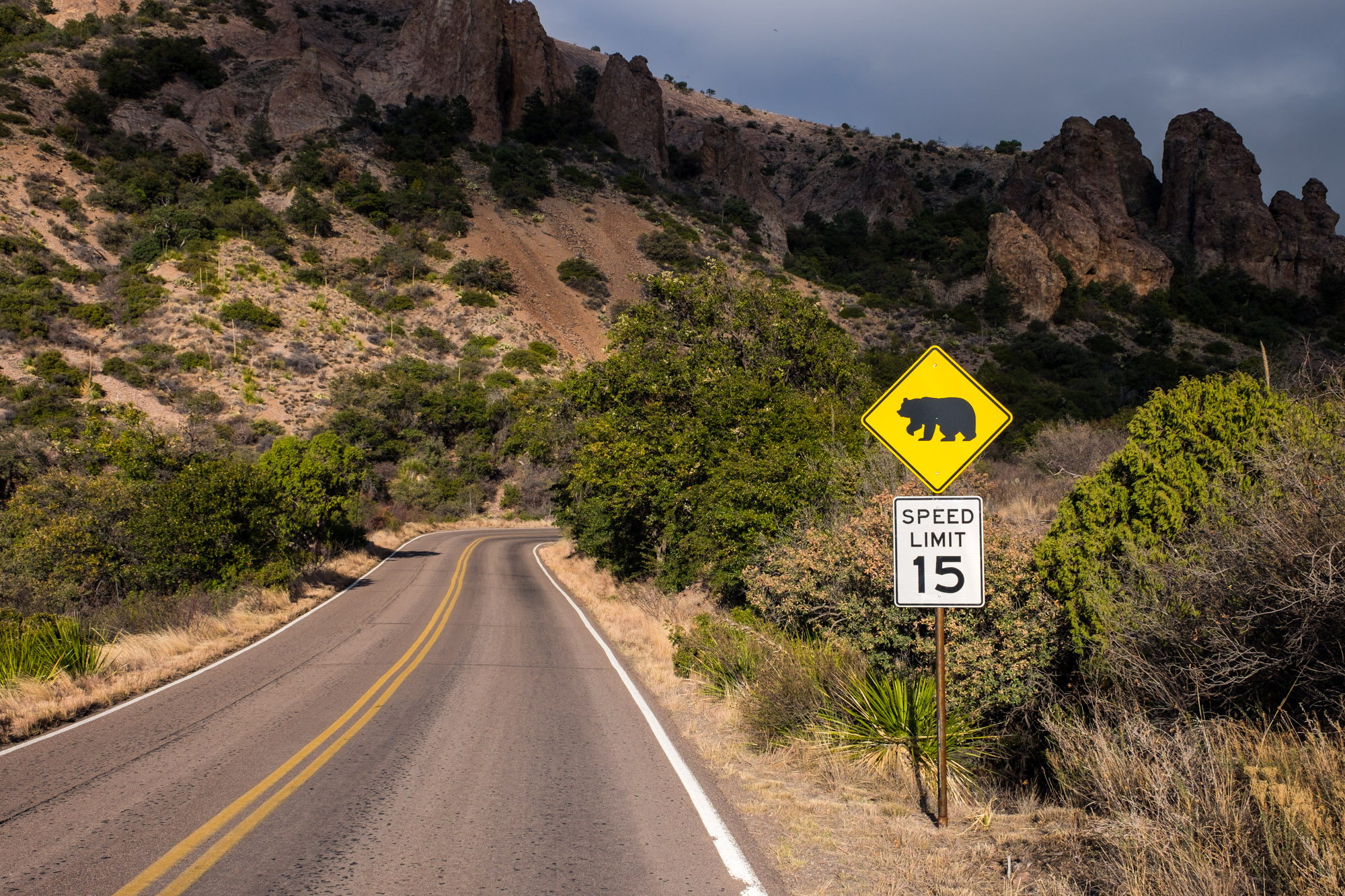 A drive up to the Chisos Basin is a must, and a great place to spot wildlife (including black bear and mountain lion).