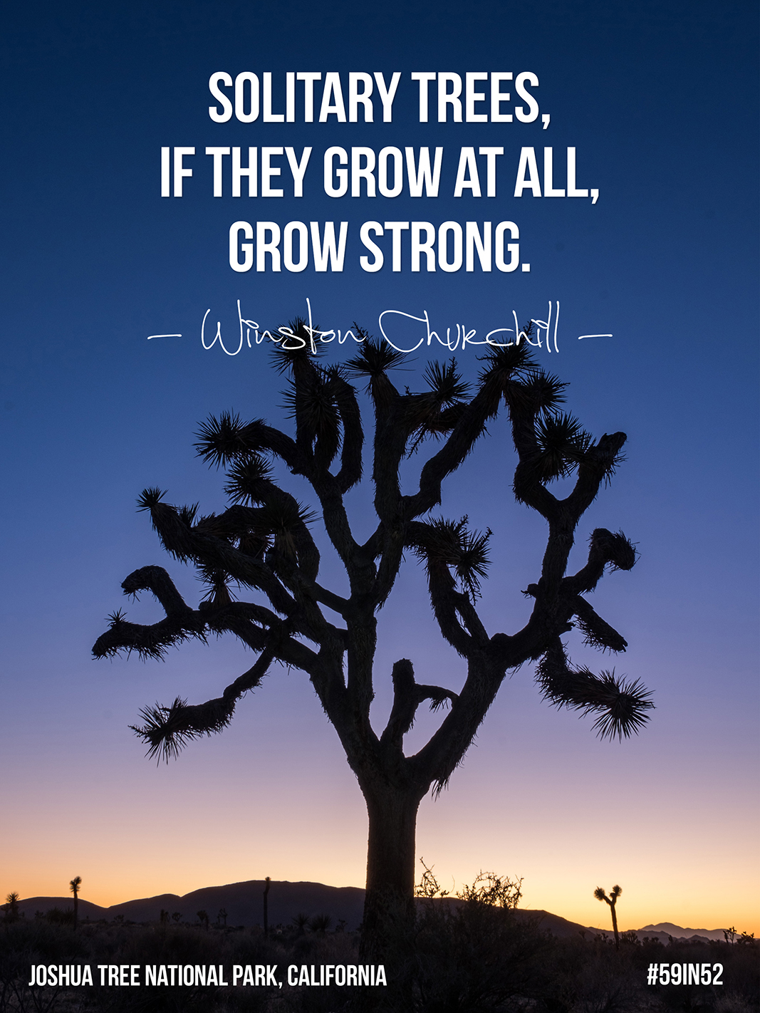 """Solitary trees, if they grow at all, grow strong."" –  Winston Churchill"