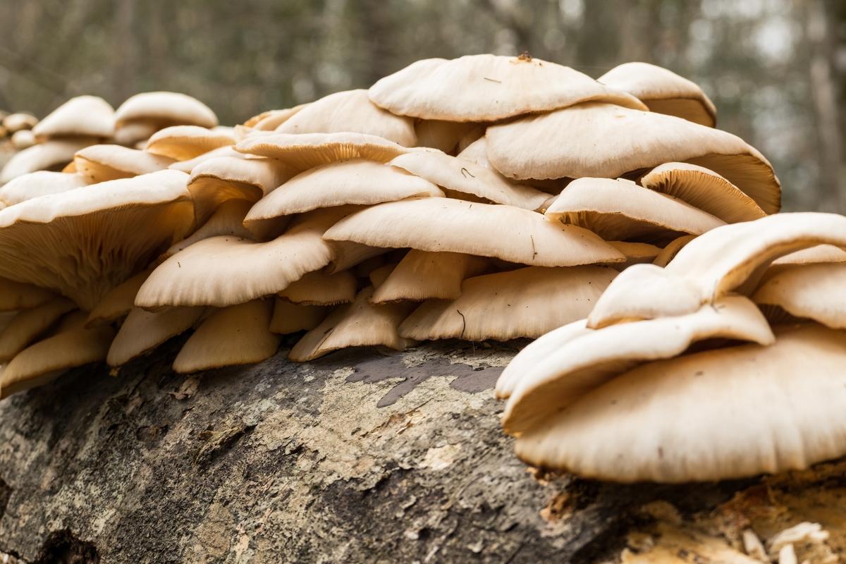 Fungi grows at Congaree National Park in South Carolina.