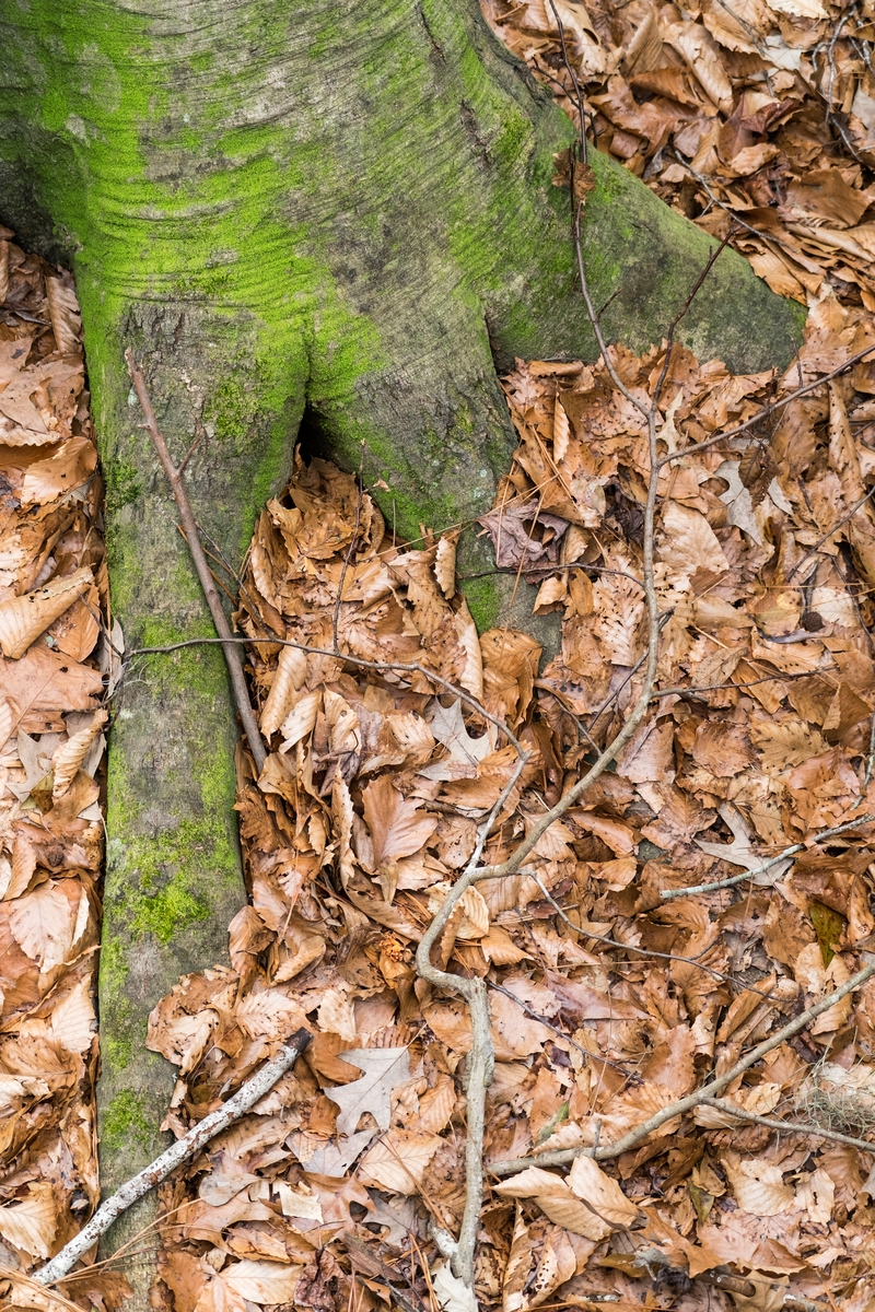 Roots and leaves at Congaree National Park in South Carolina.