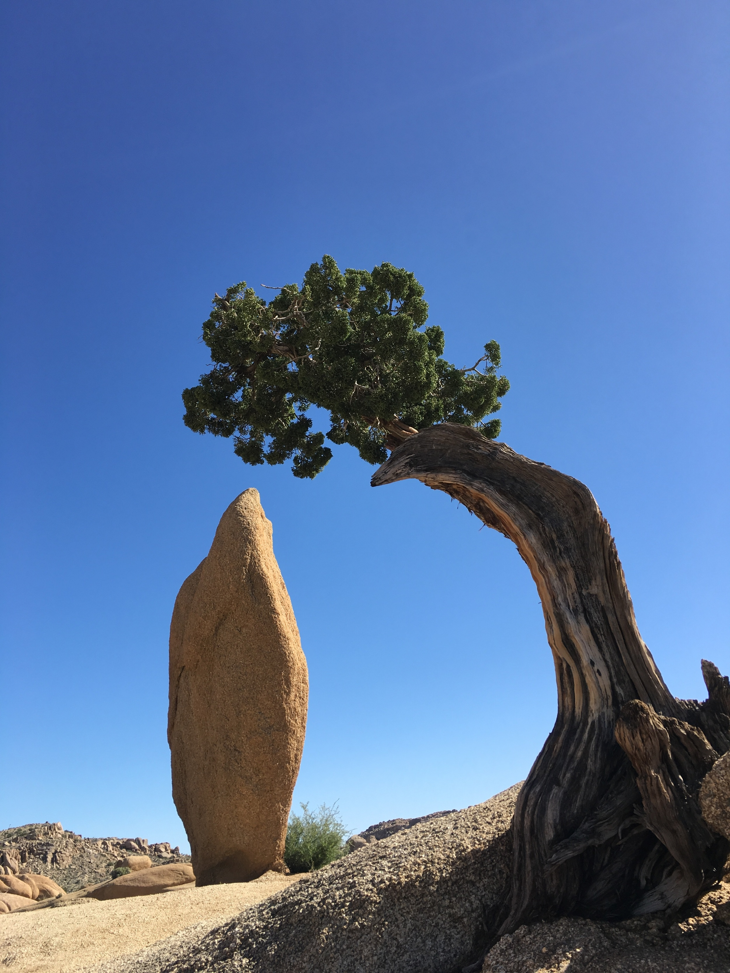 A perfect view from our campsite at Black Rock campground at Joshua Tree National Park in California.