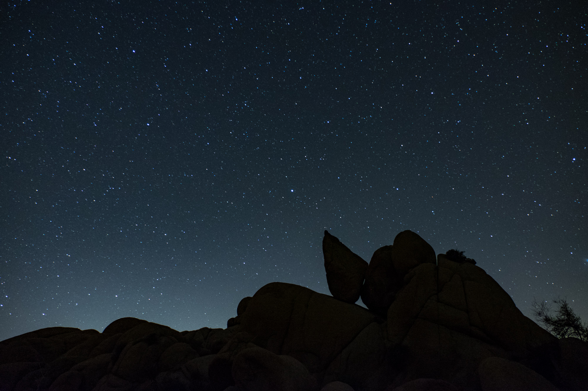 Half the park is after dark. The stars glittered for us in Joshua Tree.