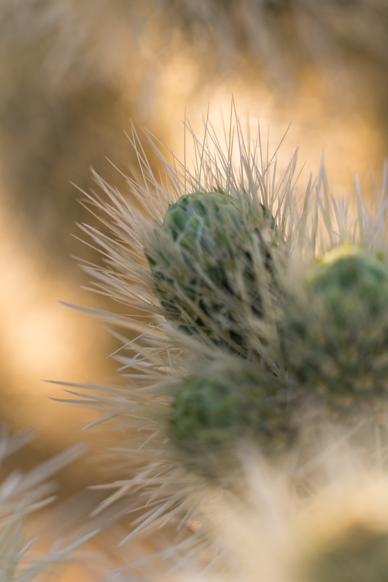 The cactus are fun to shoot with a close-up macro lens.