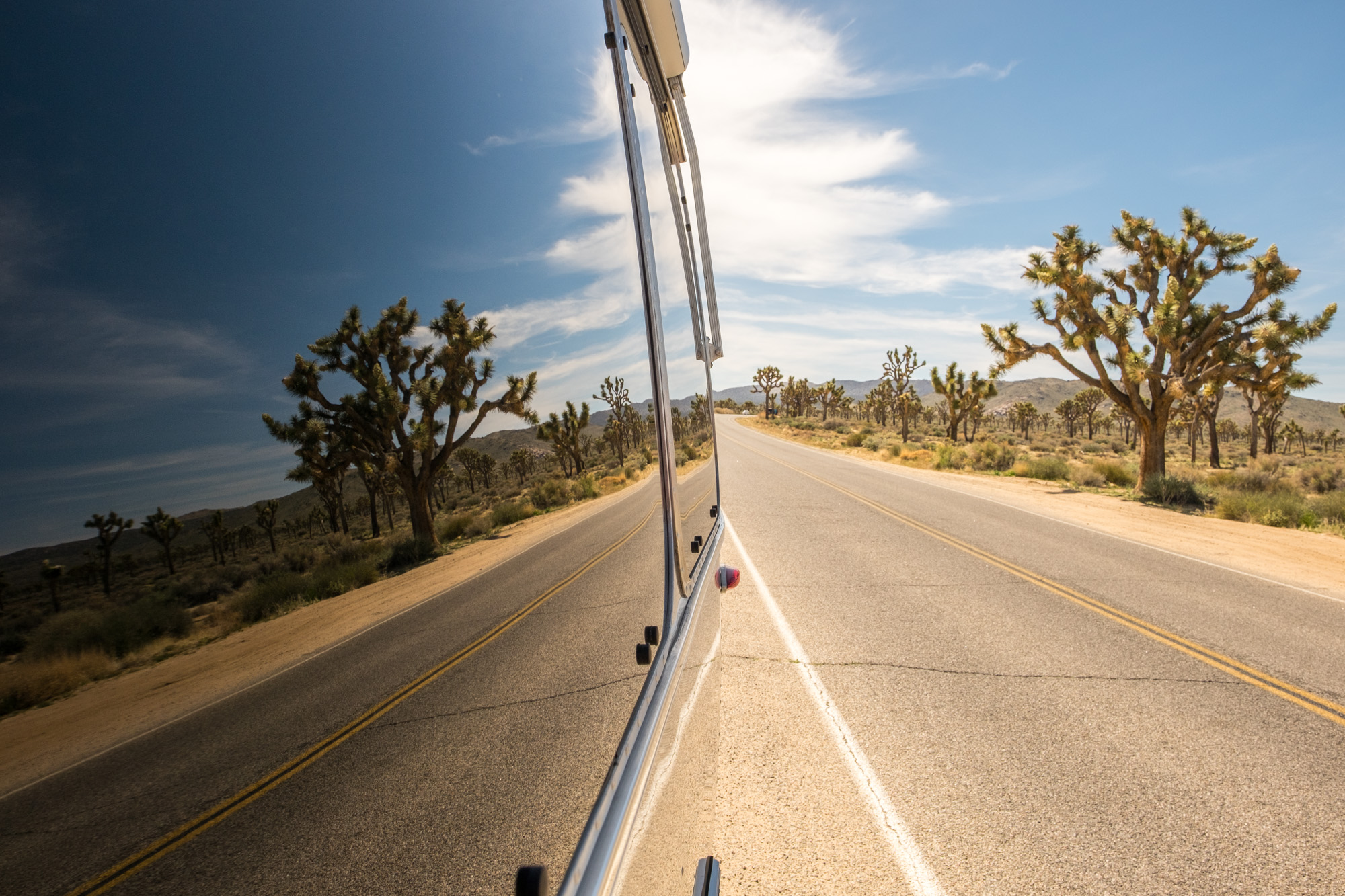 The Joshua Tree as reflected in Wally, our beloved Airstream.