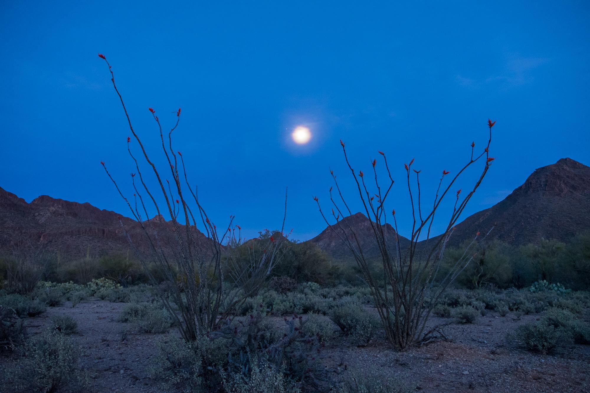 Moon glow at Saguaro National Park in Arizona.