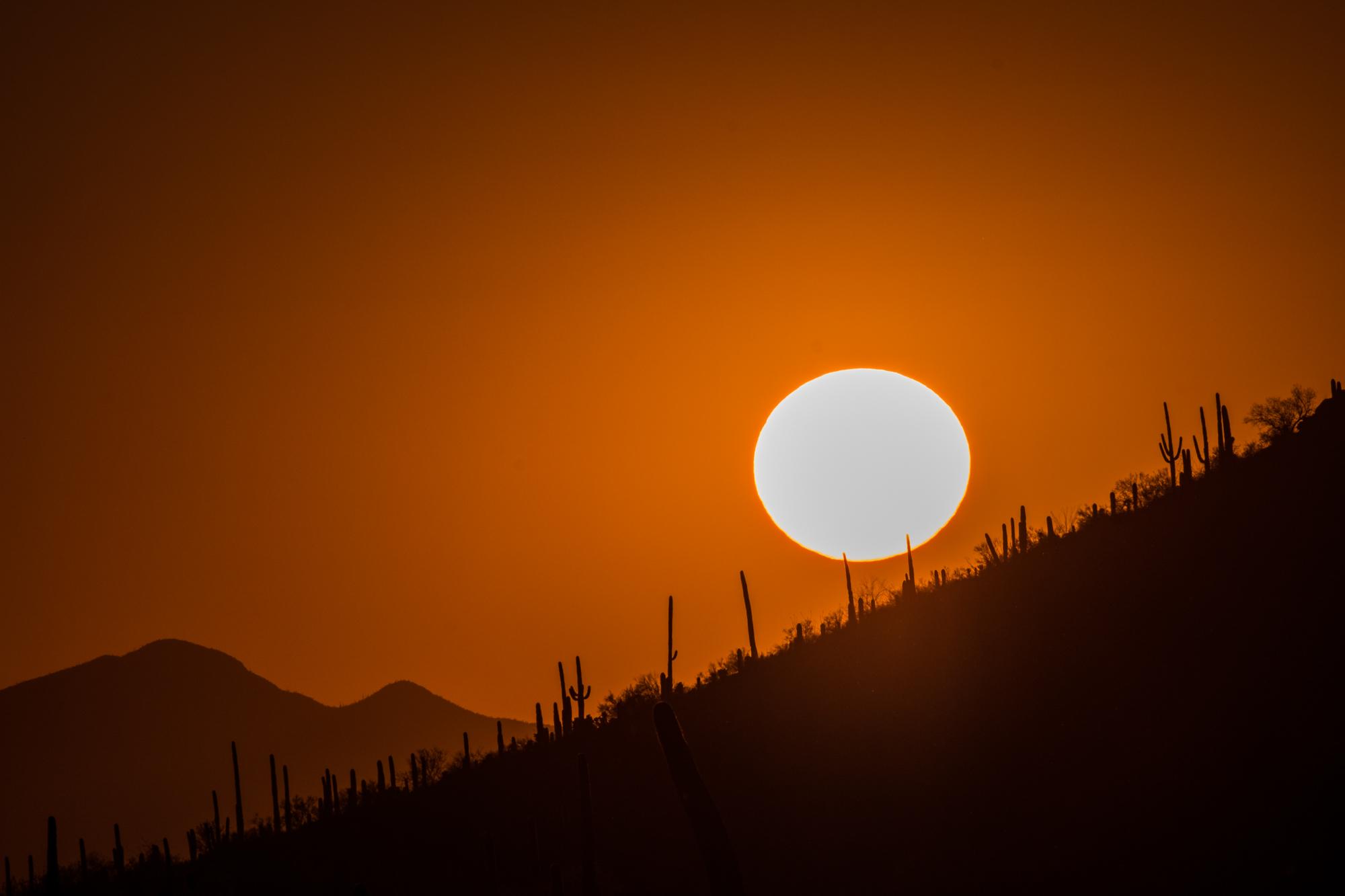 The blazing desert sun at Saguaro National Park in Arizona.