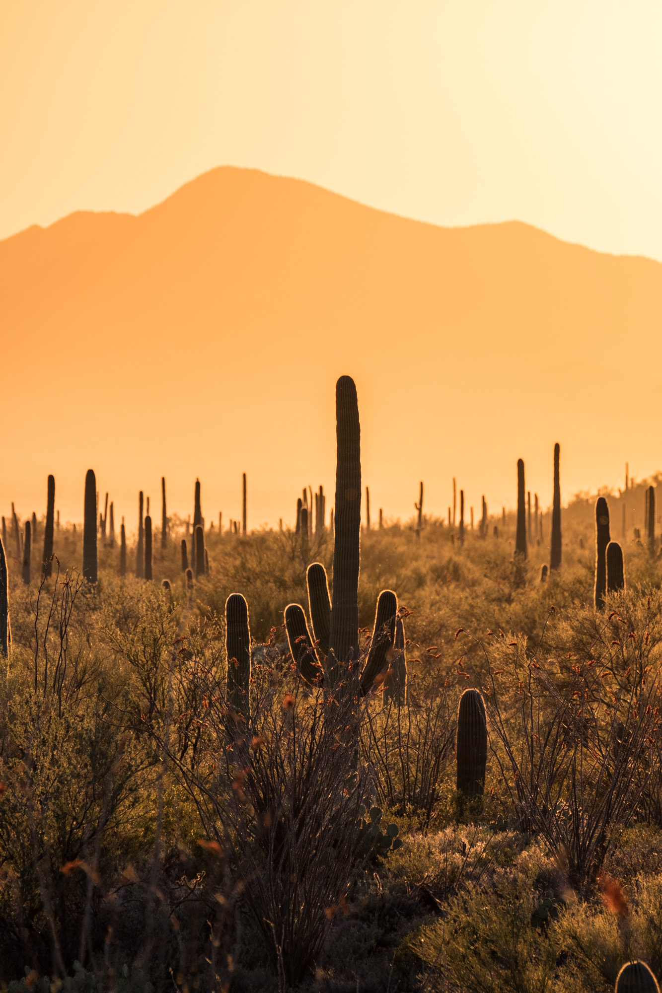 Saguaro National Park - 044.jpg