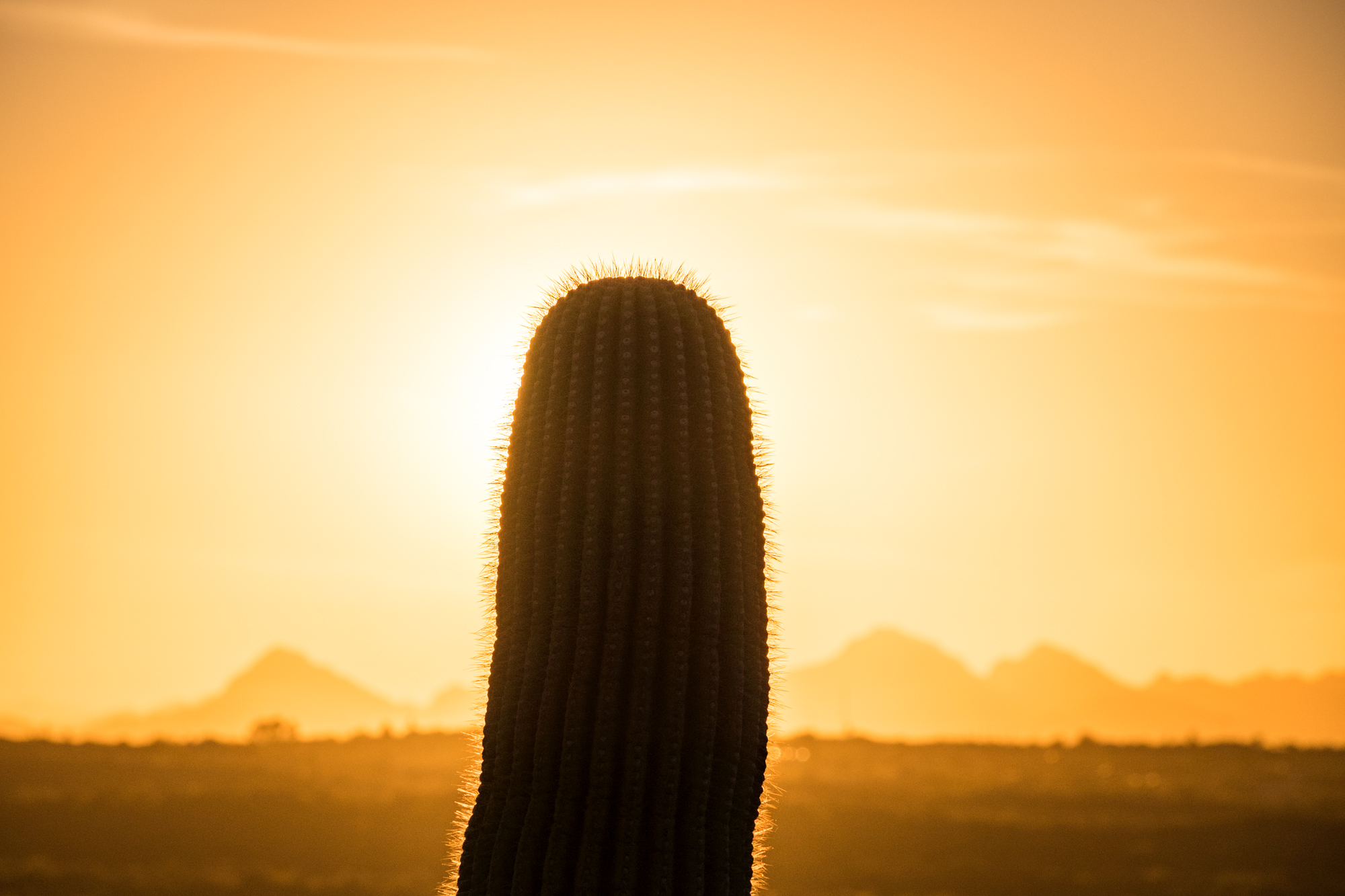 Saguaro National Park - 038.jpg