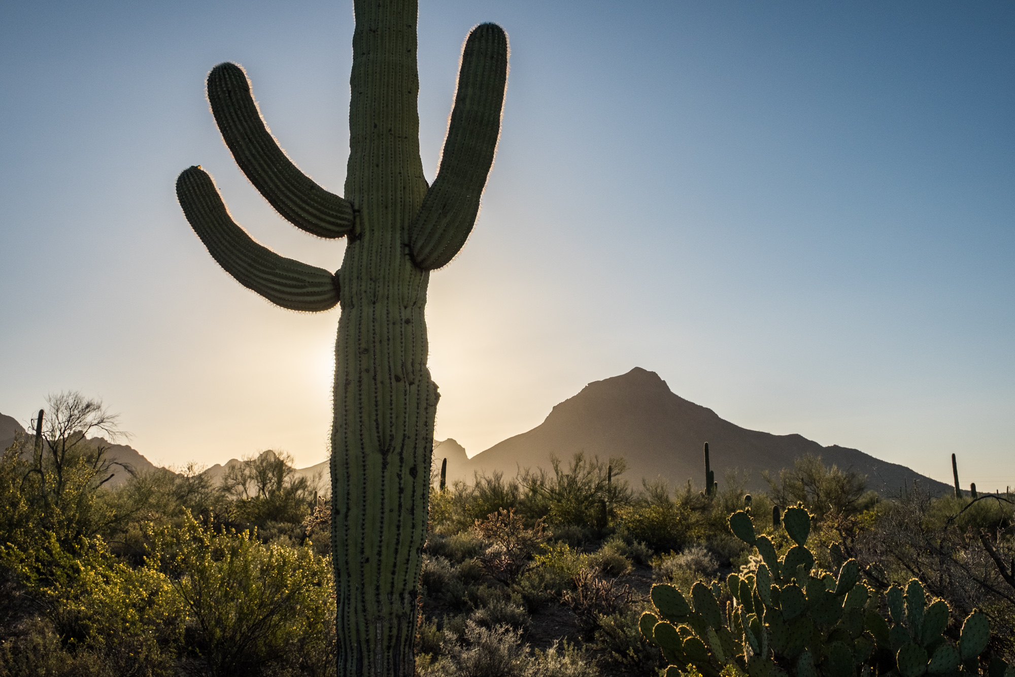 Saguaro National Park - 031.jpg