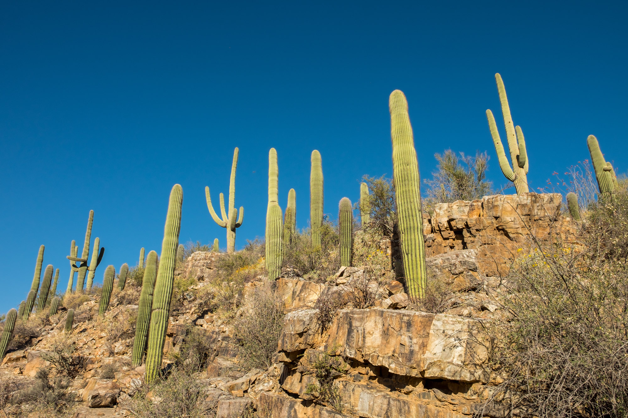 Saguaro National Park - 016.jpg