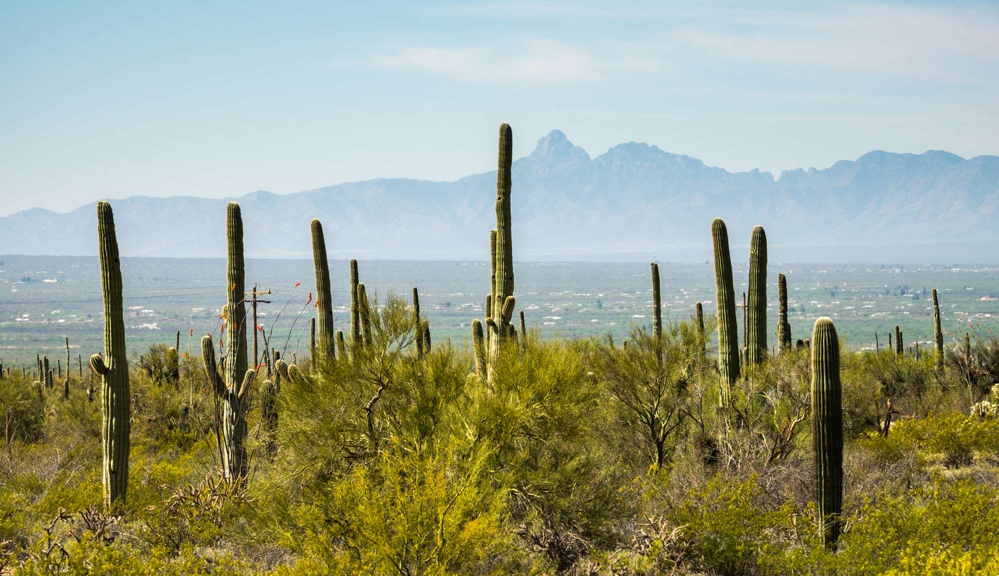 Saguaro National Park - 003.jpg