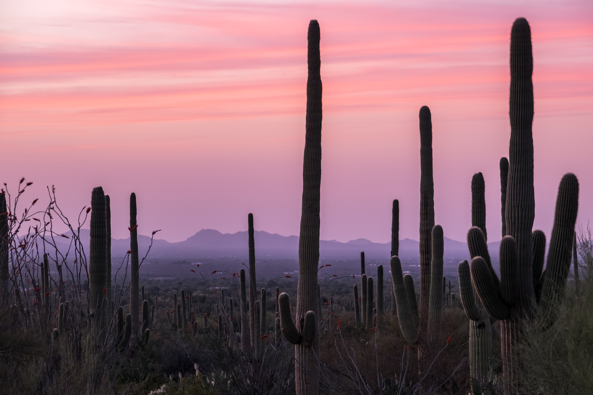 Beautiful pink skies and green cactus.