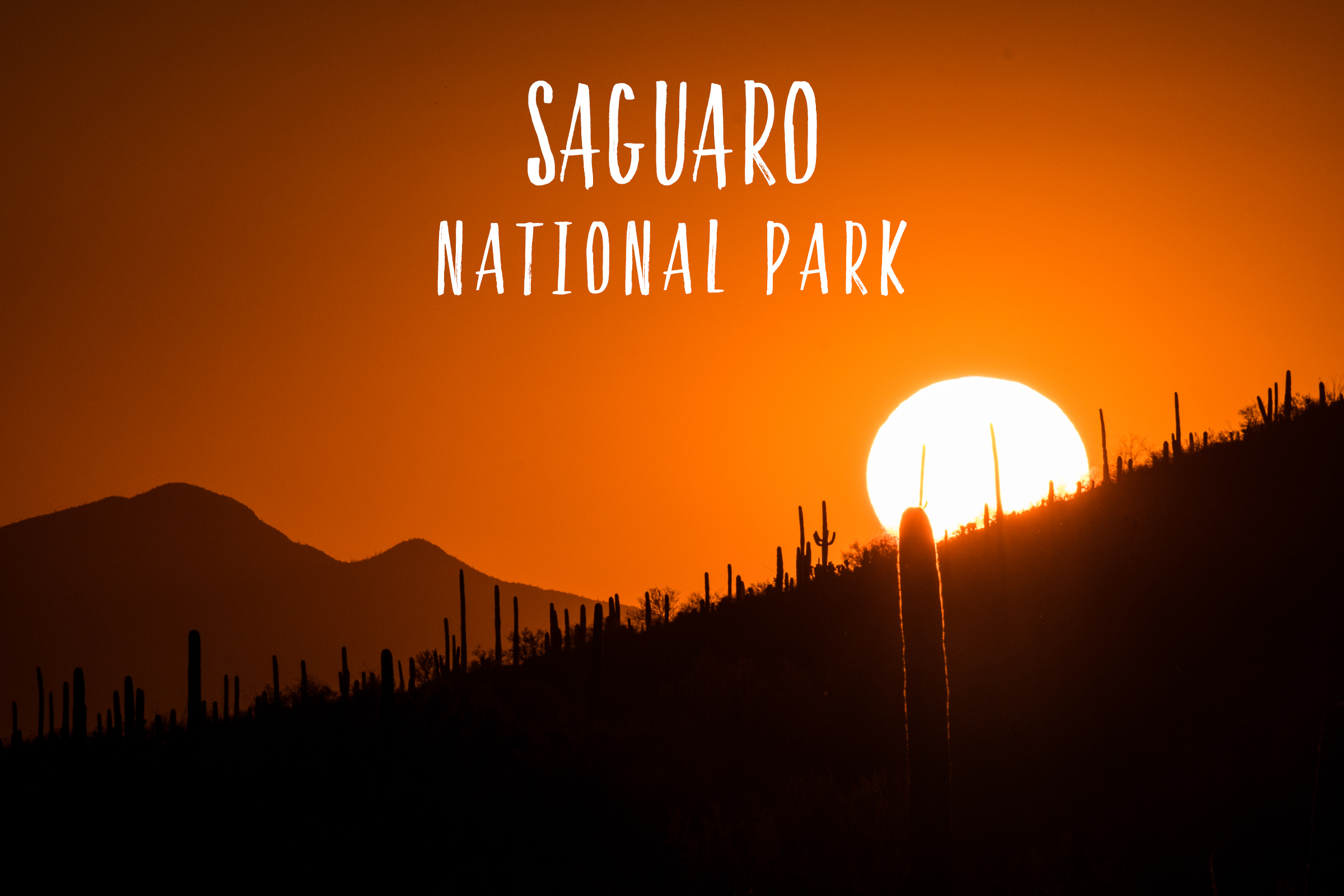 Saguaro National Park | Park 16/59