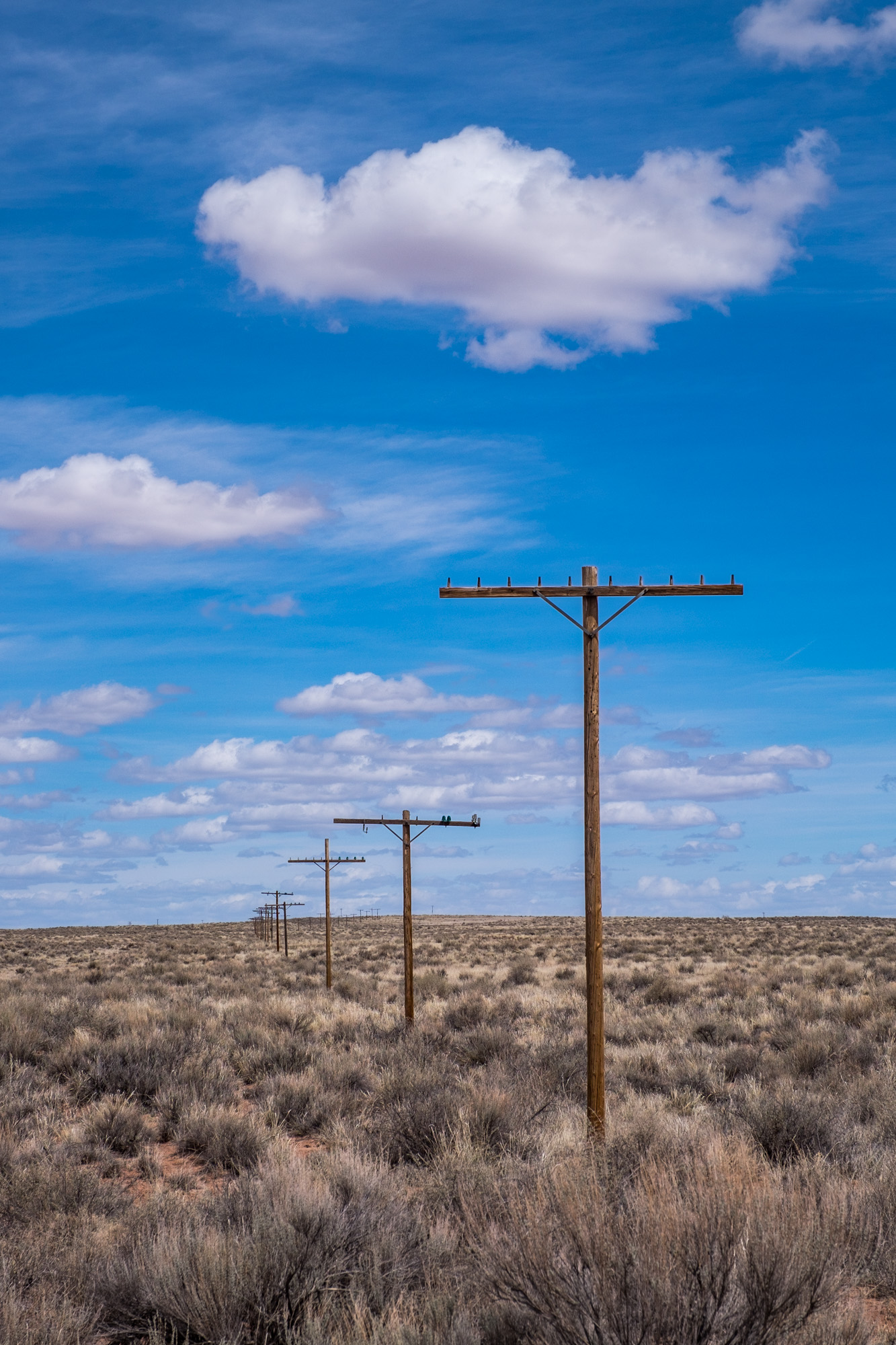 Not much exists of the old Route 66 in many places. Here, only old telephone poles show the old highway's once well traveled route.