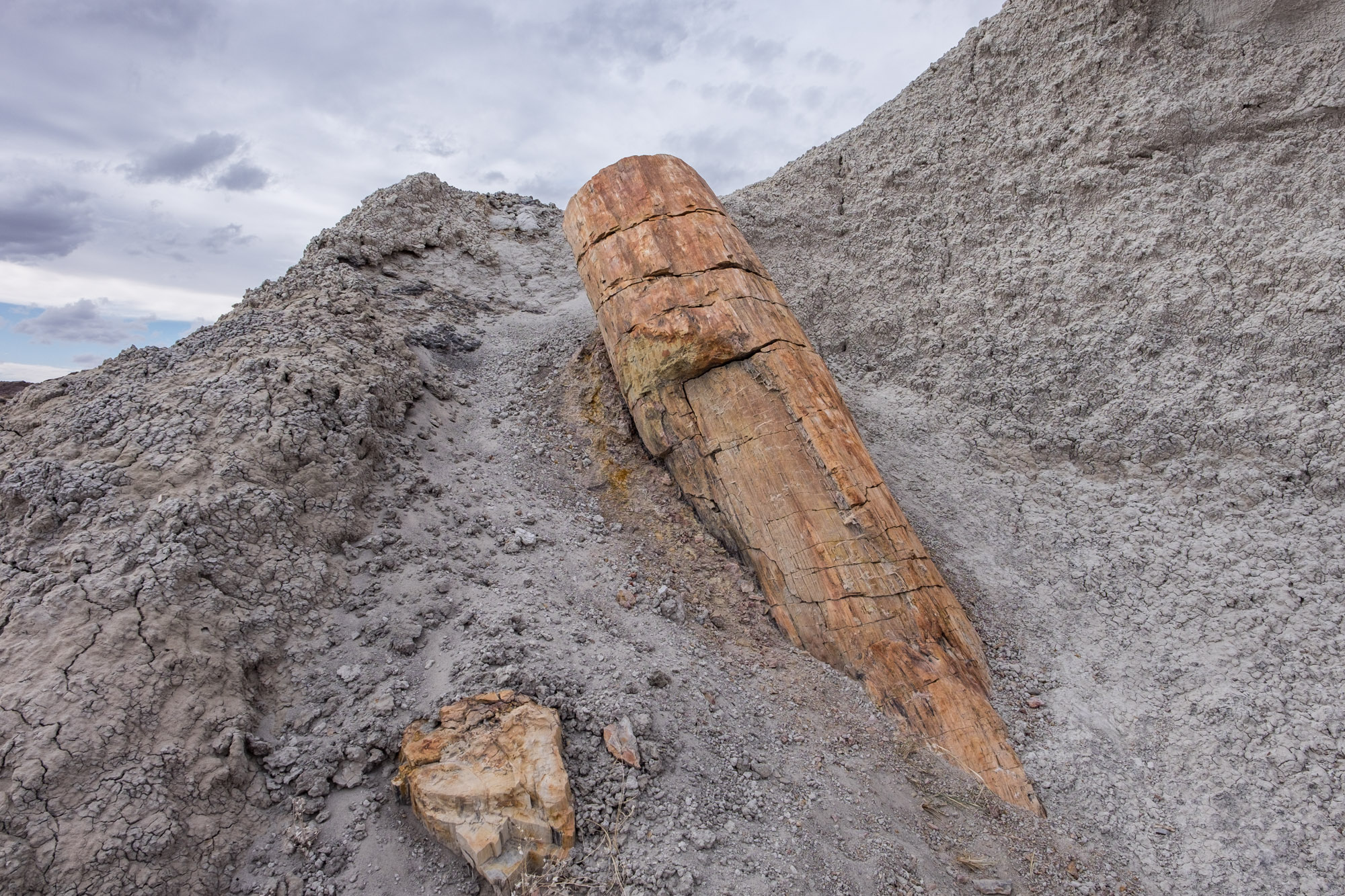 We hiked to a distant area of the park to find some petroglyphs and also stumbled upon this newly visible log. Erosion has exposed this log after hundreds of millions of years of being buried.