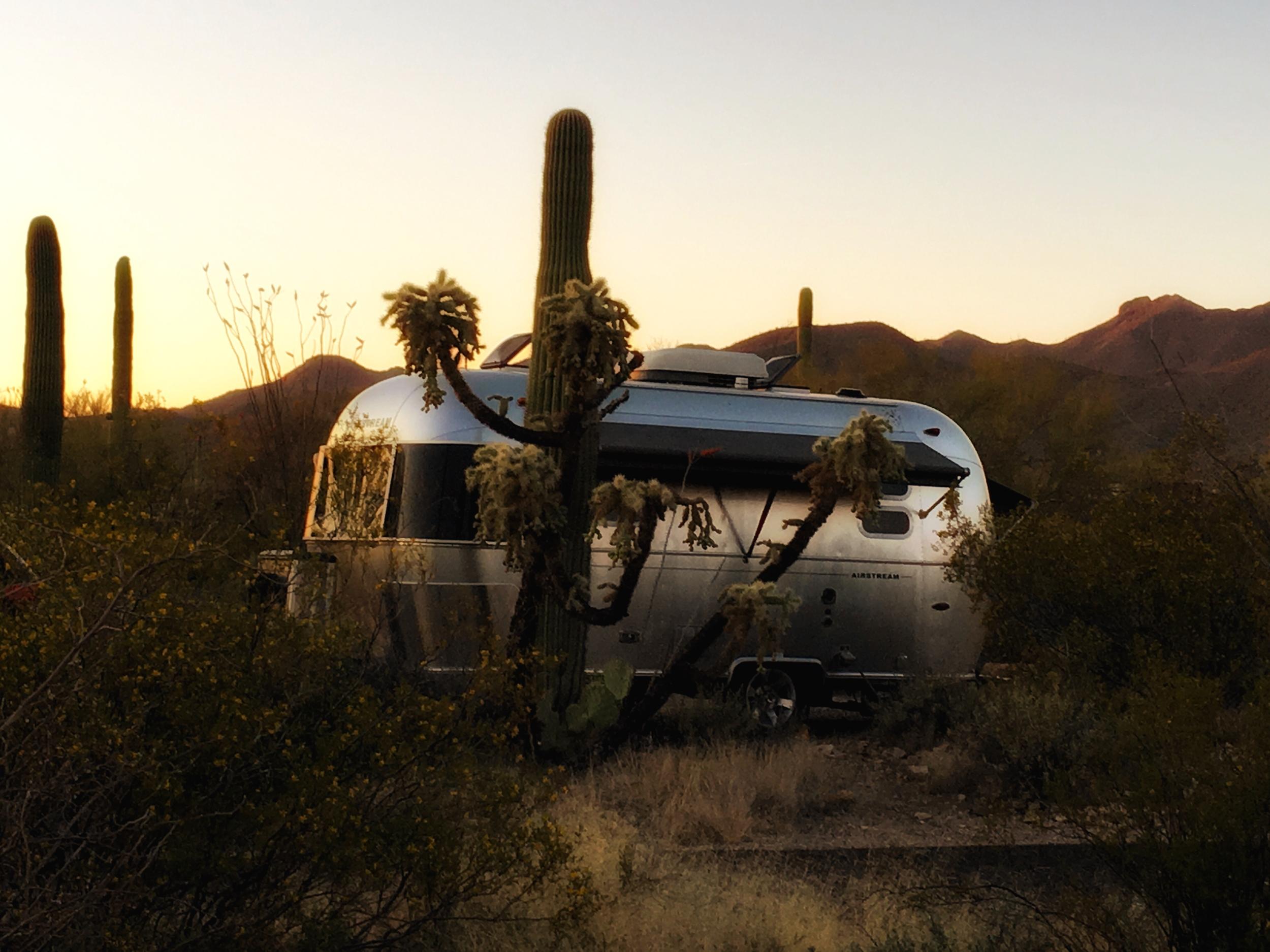 It isn't Wally, but a caravan friend in Saguaro National Park in AZ.