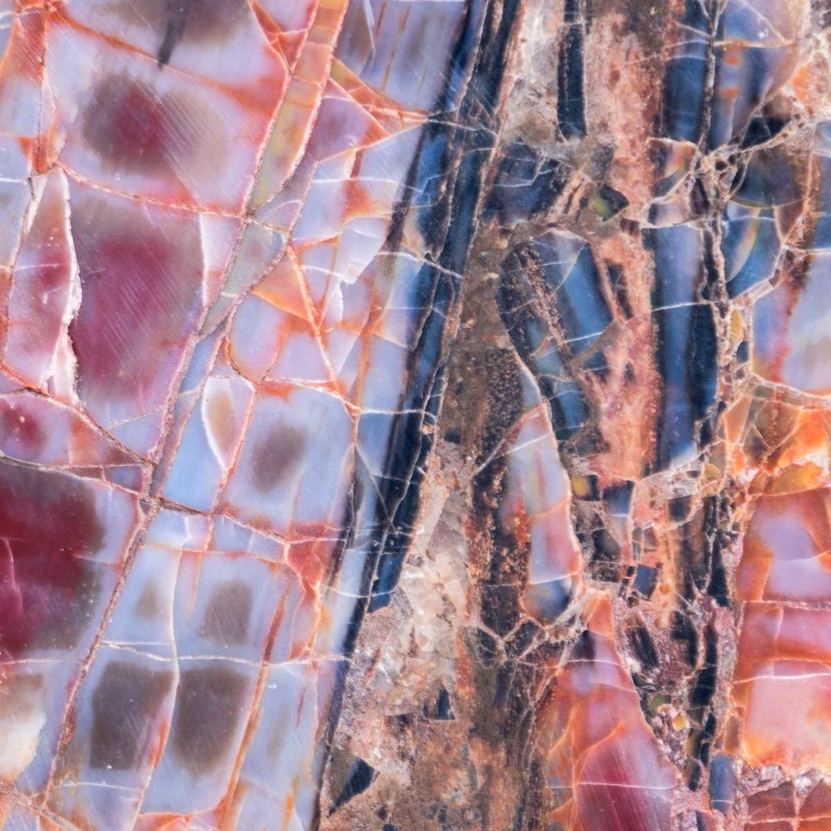 Detail of ornate petrified wood -- colorful quartz after exposure to the forces of nature for 225 million years --at Petrified Forest National Park in northern Arizona.