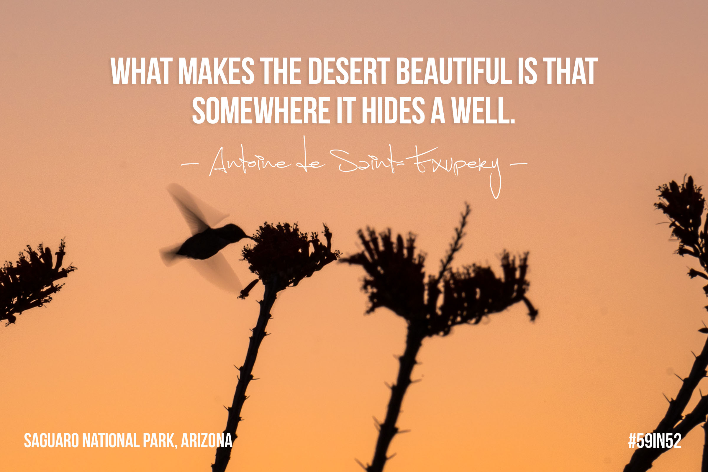 """What makes the desert beautiful is that somewhere it hides a well."" - Antoine de Saint Exupery"