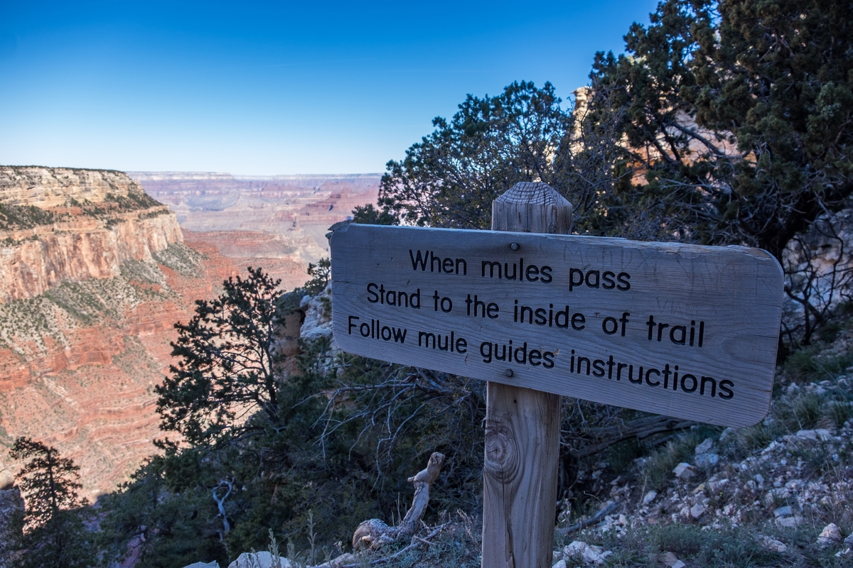 Let mules pass on your way to the bottom of the Grand Canyon.