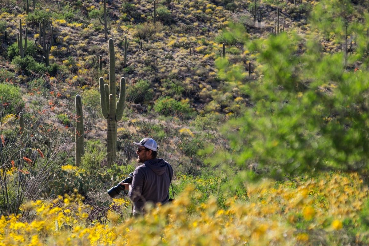20160323-SP-Saguaro National Park-_DSF8110.jpg