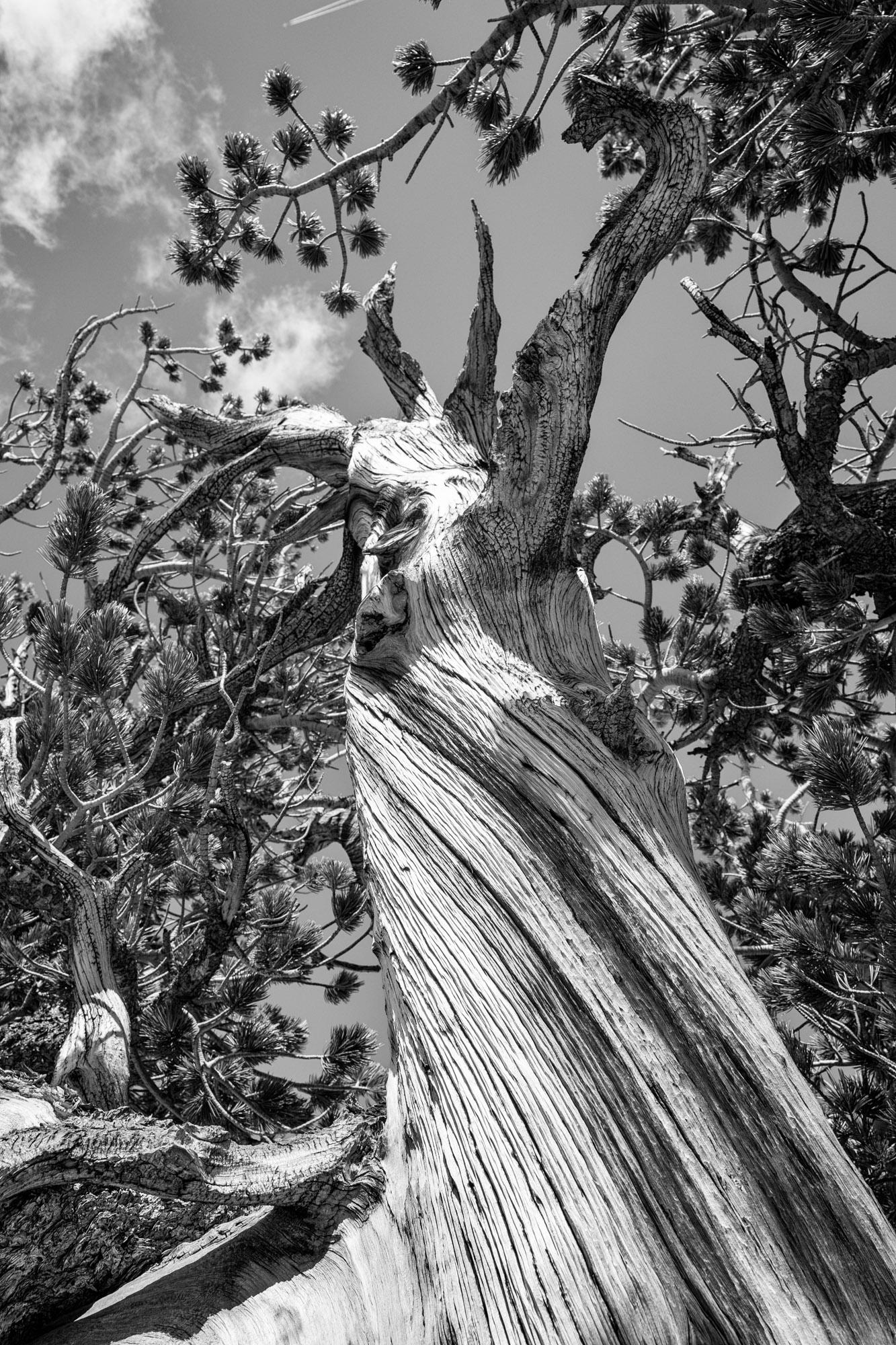 Great Basin National Park - 060.jpg