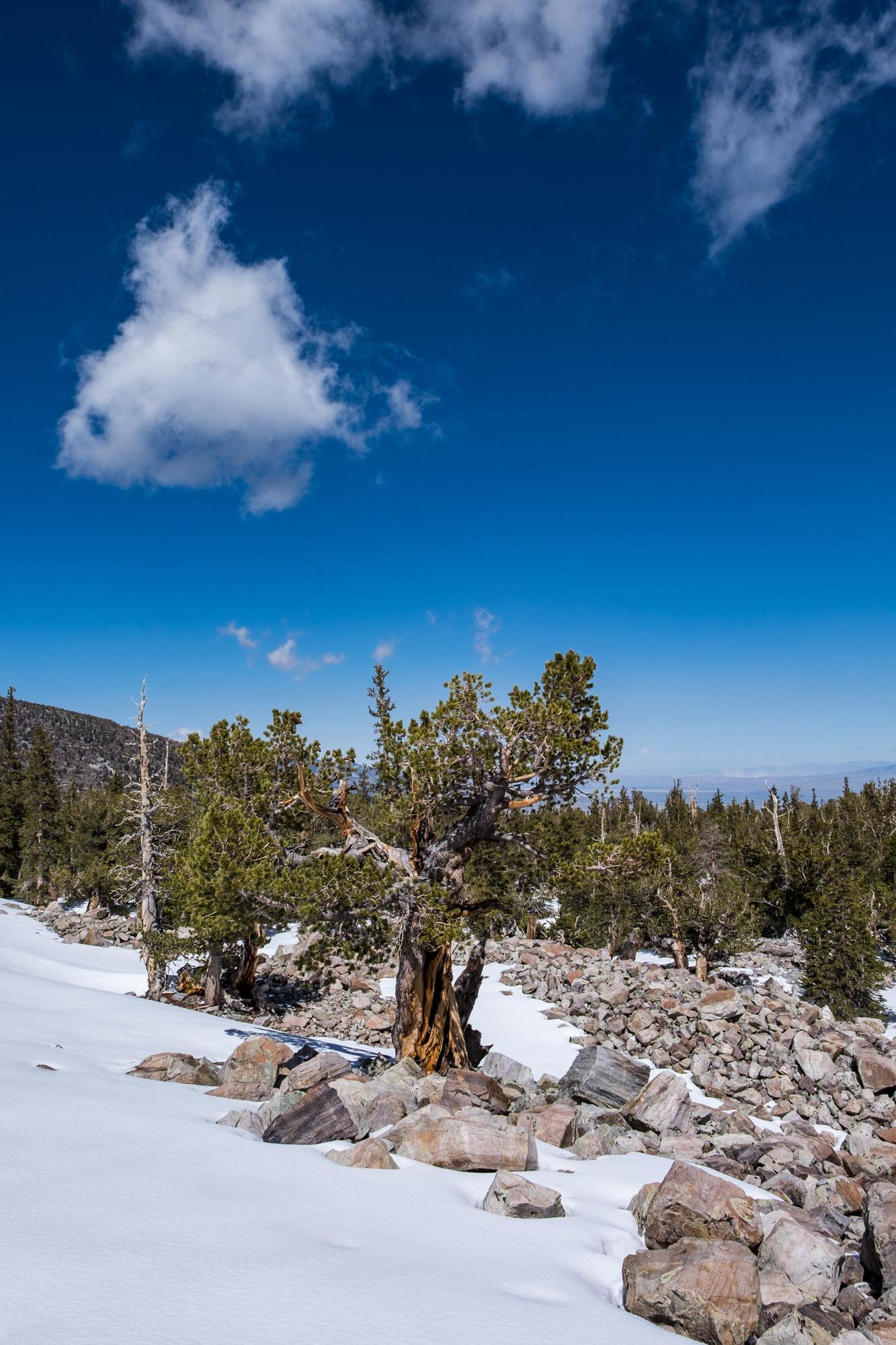 Great Basin National Park - 061.jpg