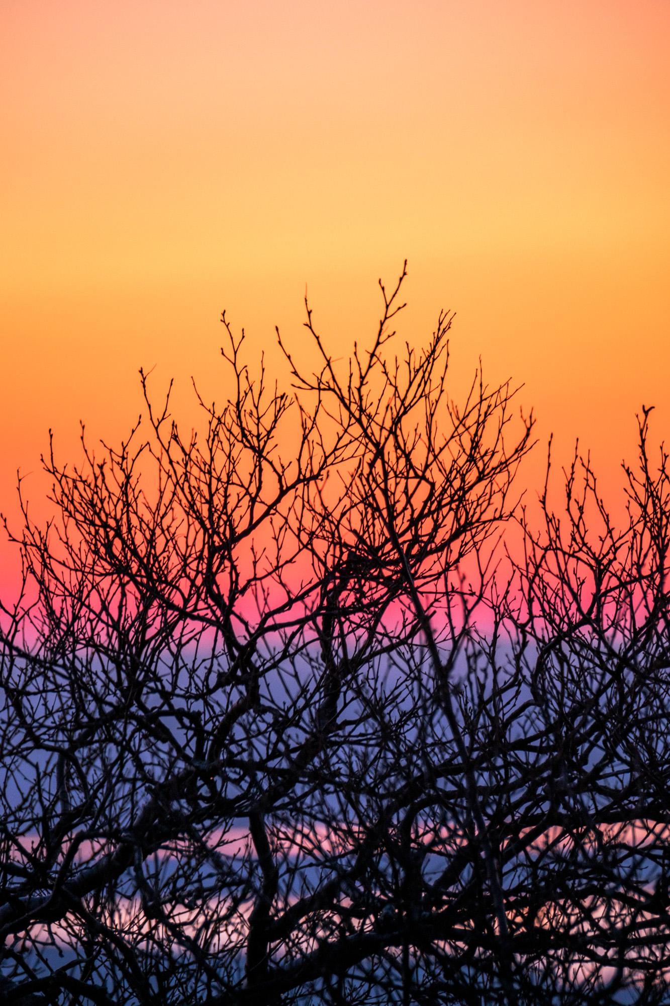 Fun textures in the setting sun.