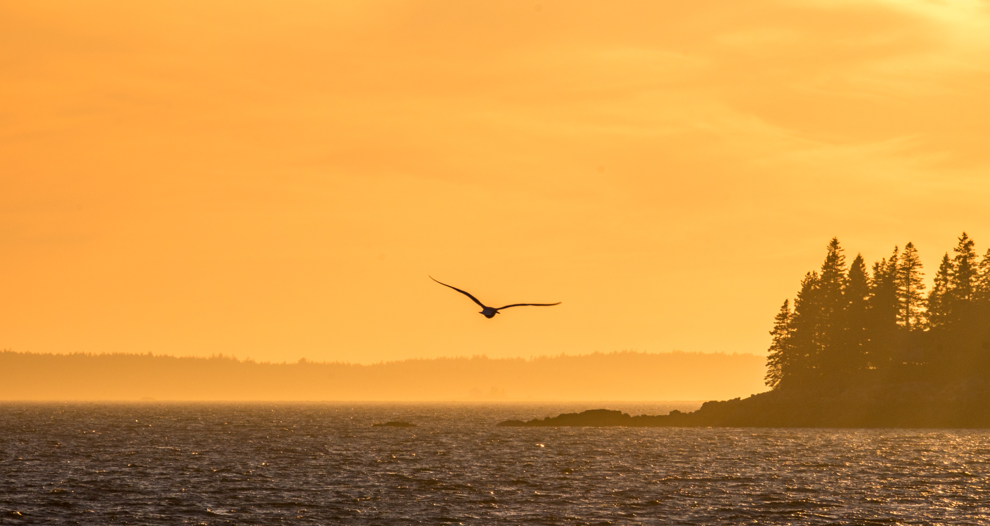 Seabirds fly into the sunset.