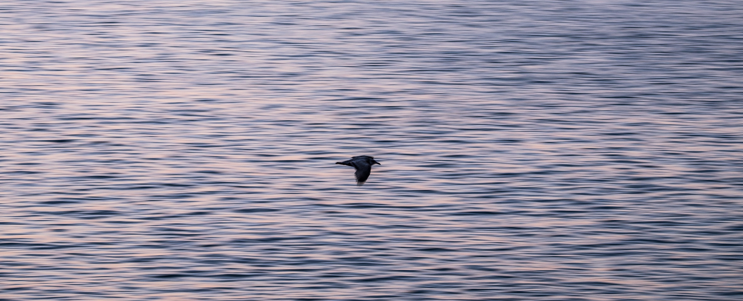 Birds soar throughout Acadia National Park in Maine.