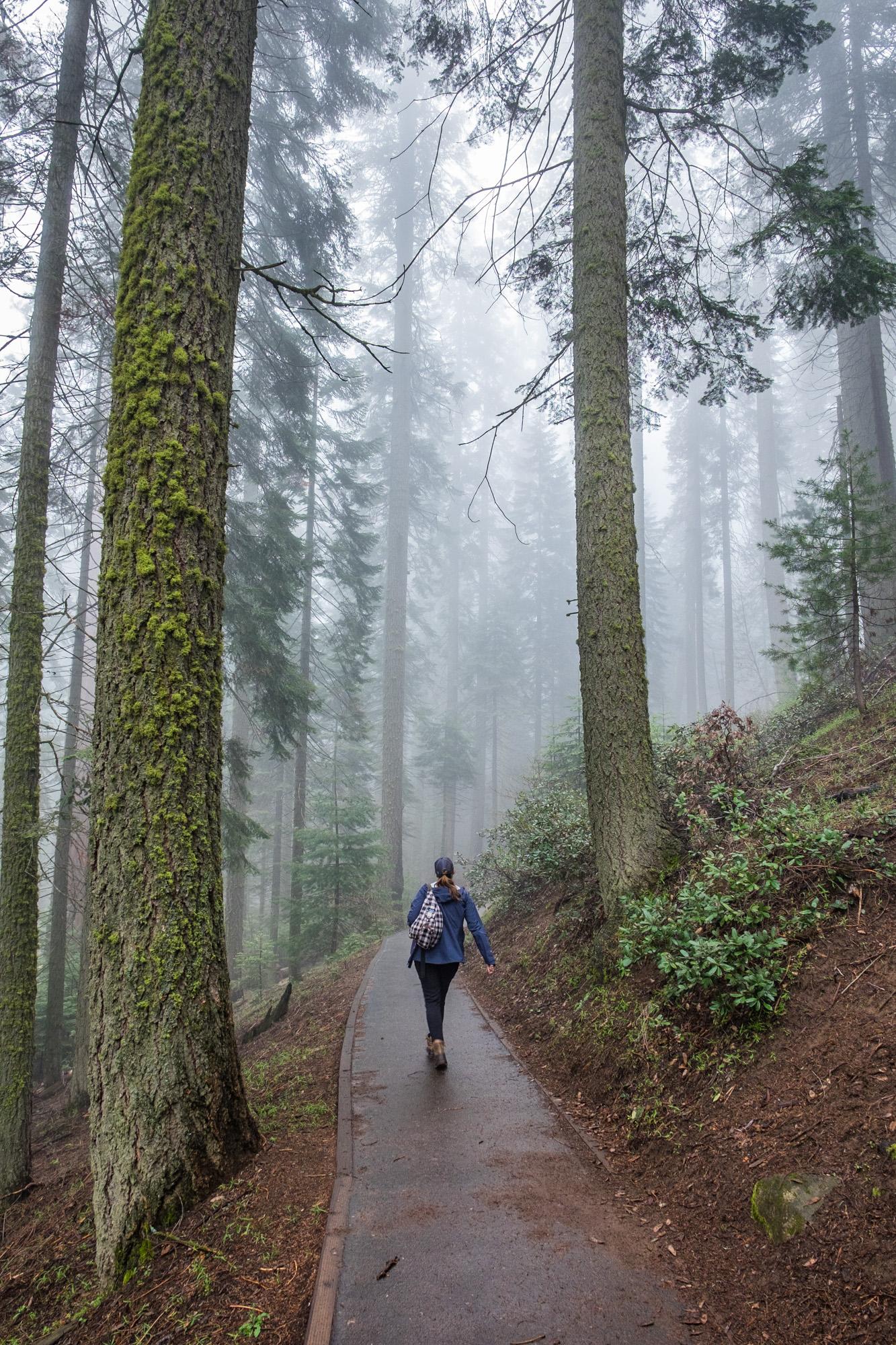 Sequoia National Park - 017.jpg
