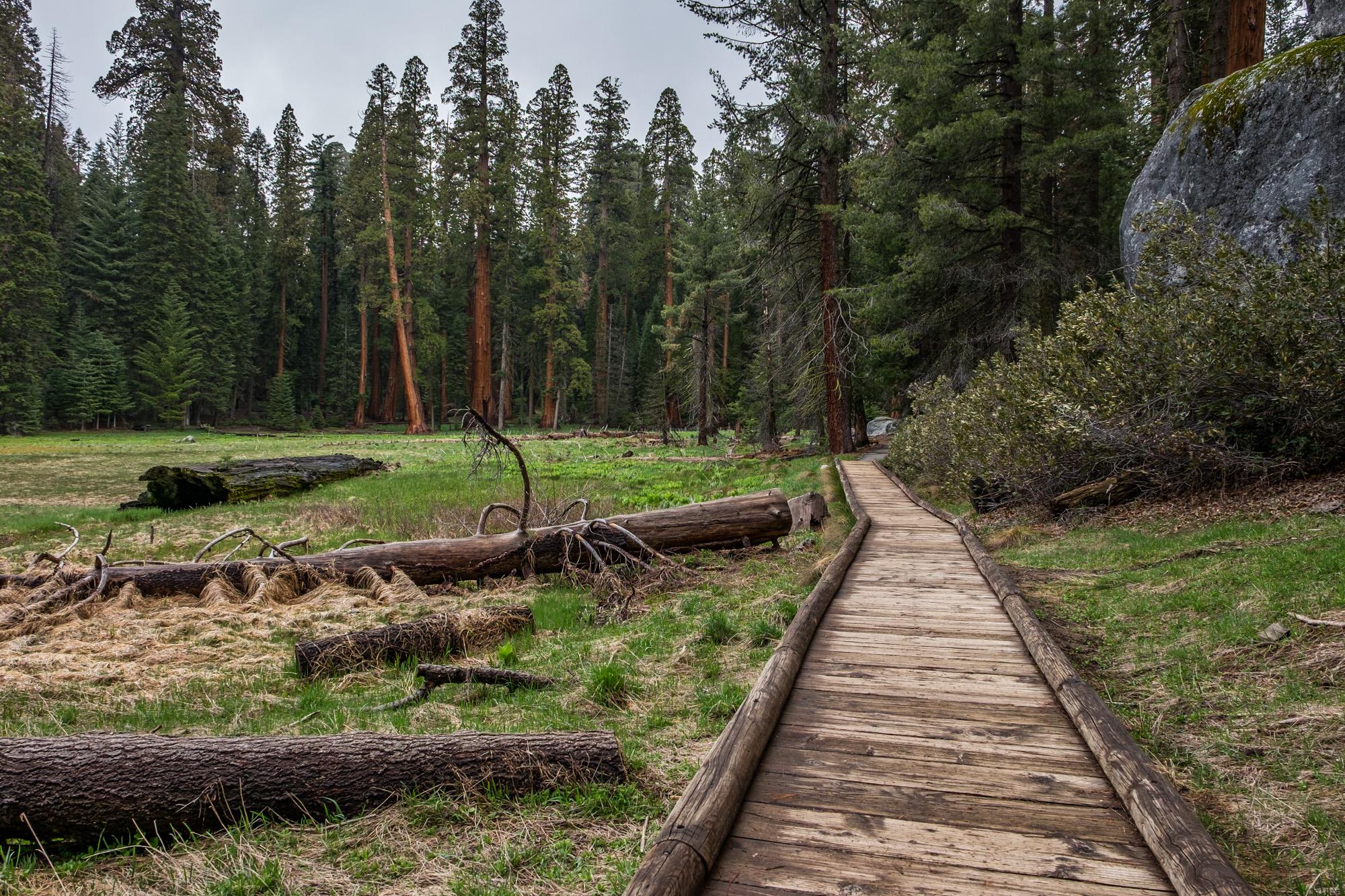 Sequoia National Park - 024.jpg