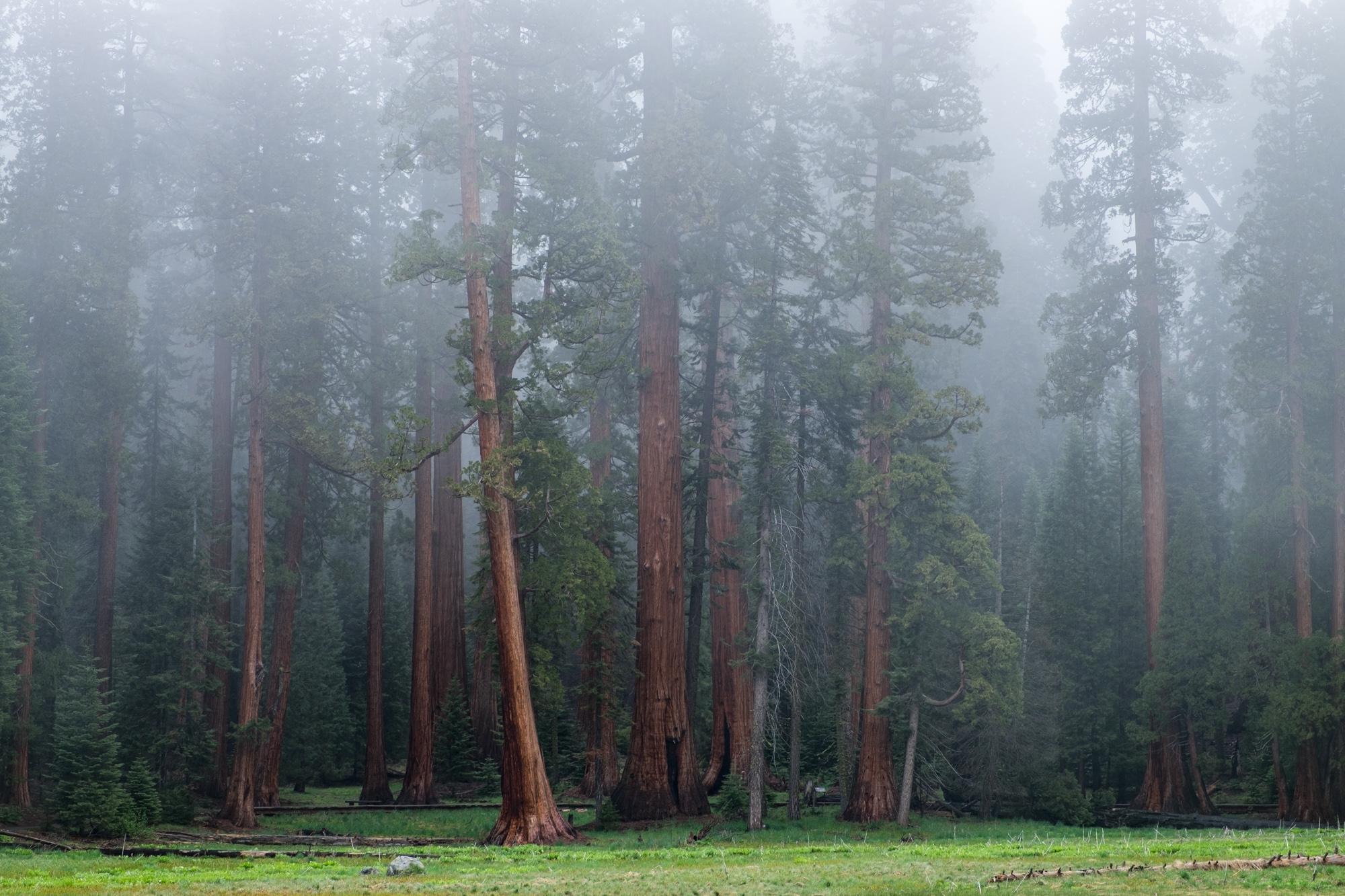 Sequoia National Park - 026.jpg
