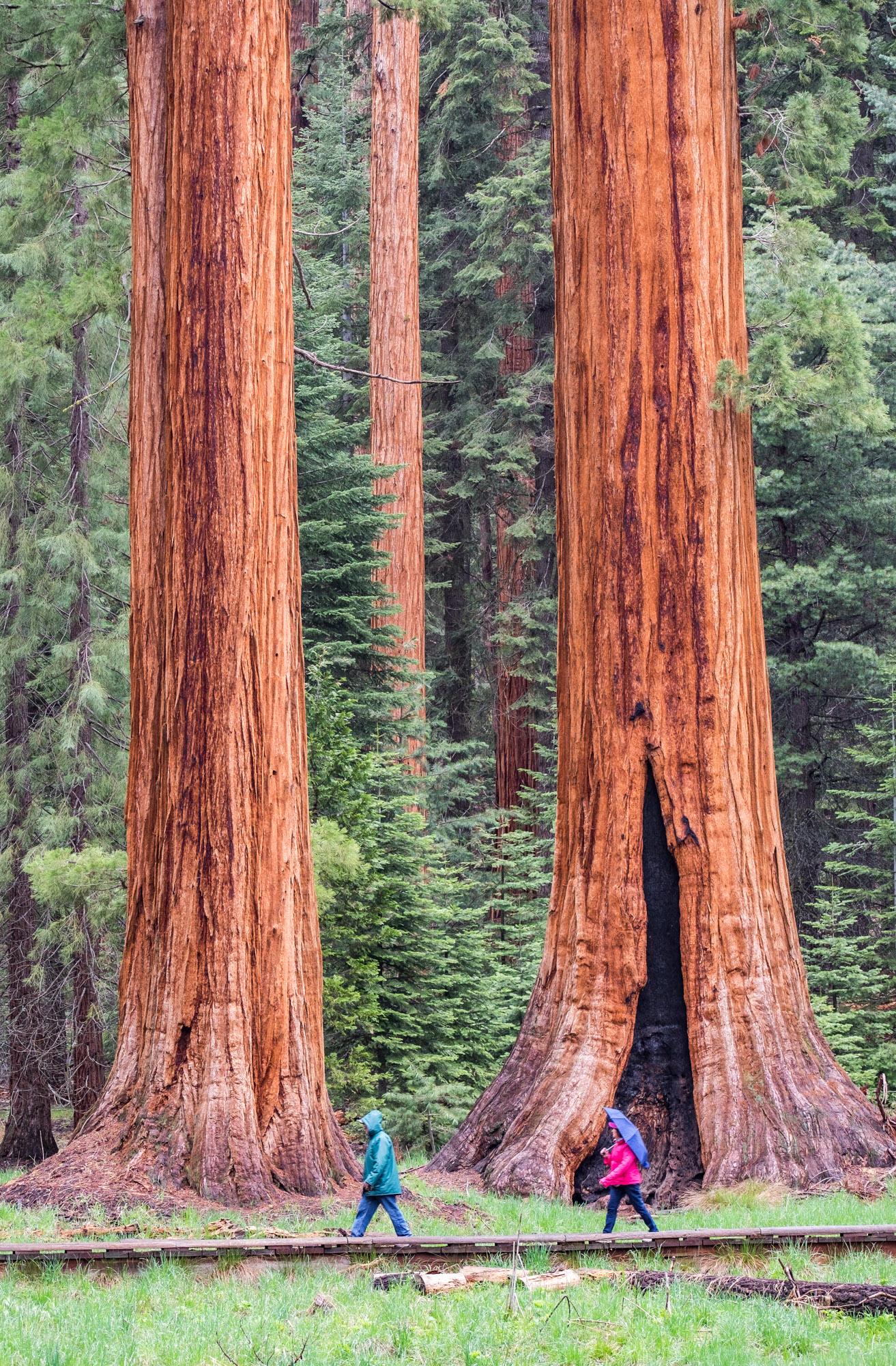 Sequoia National Park - 029.jpg