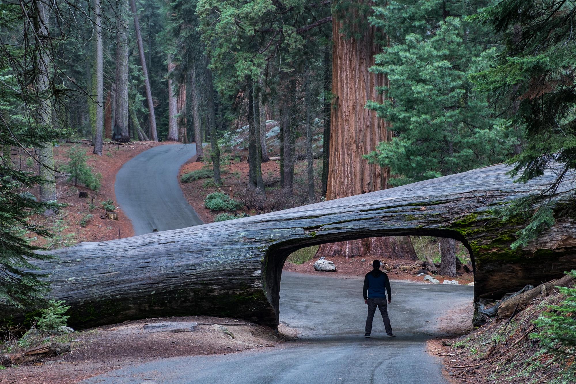 Sequoia National Park - 036.jpg