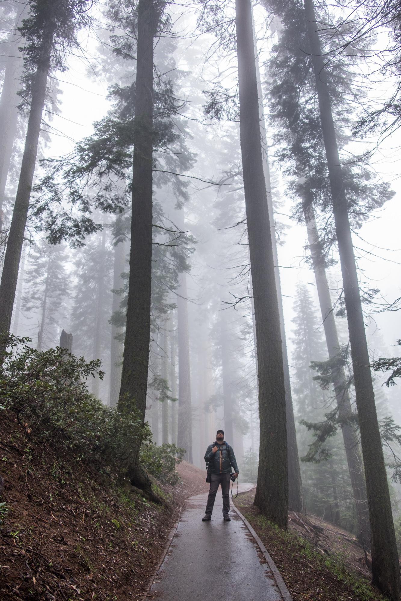 Sequoia National Park - 038.jpg