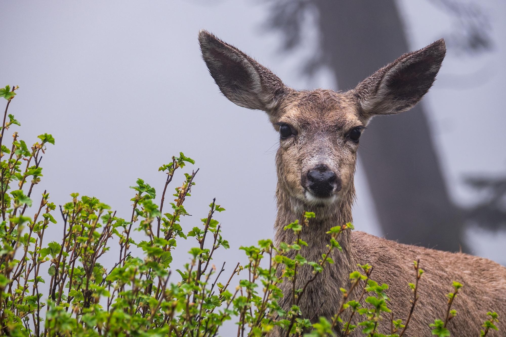 Sequoia National Park - 040.jpg