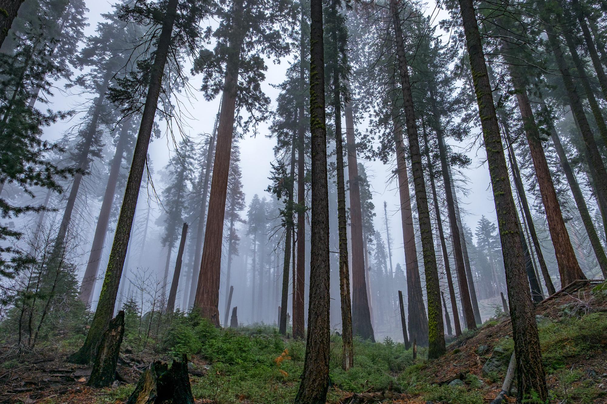 Sequoia National Park - 046.jpg