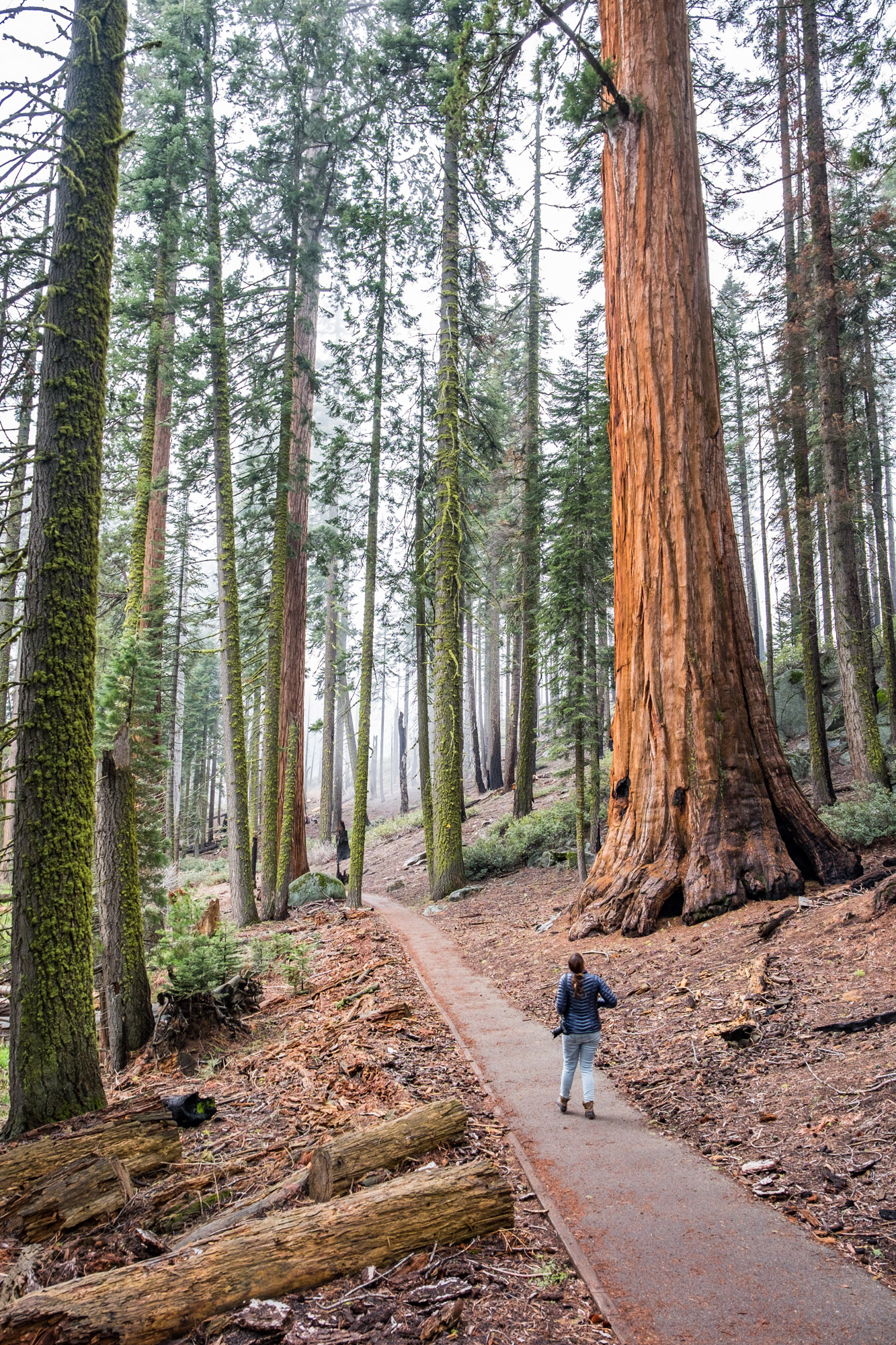 Sequoia National Park - 054.jpg