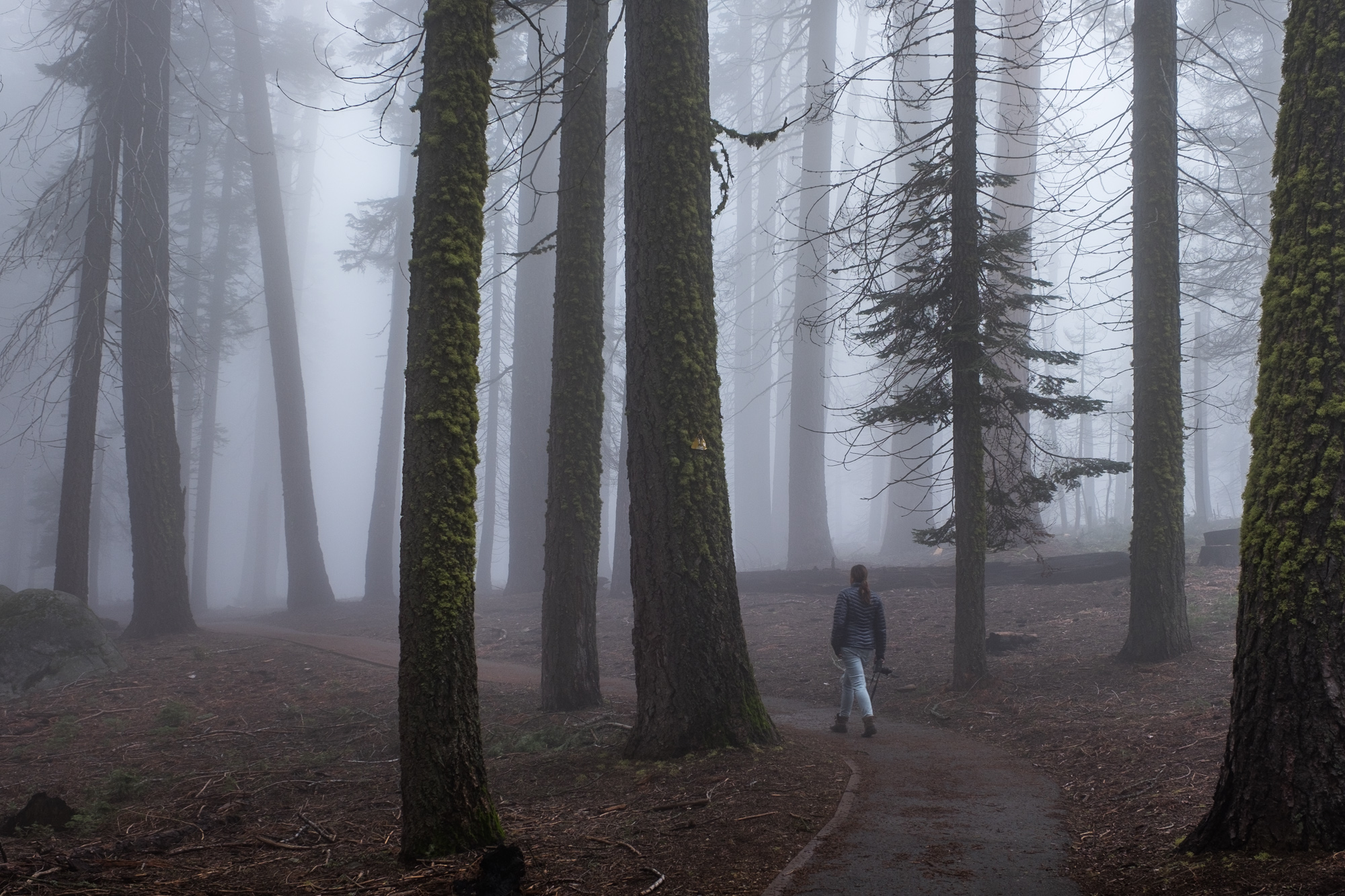 Sequoia National Park - 056.jpg