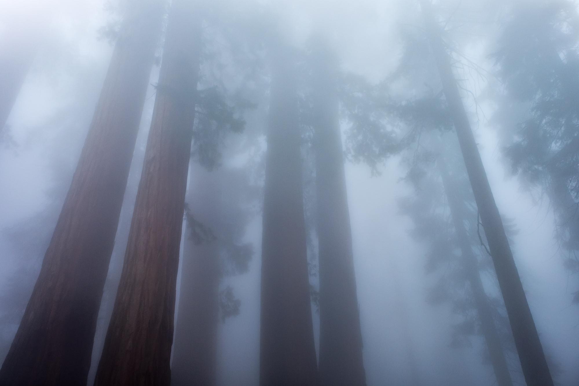 Sequoia National Park - 058.jpg