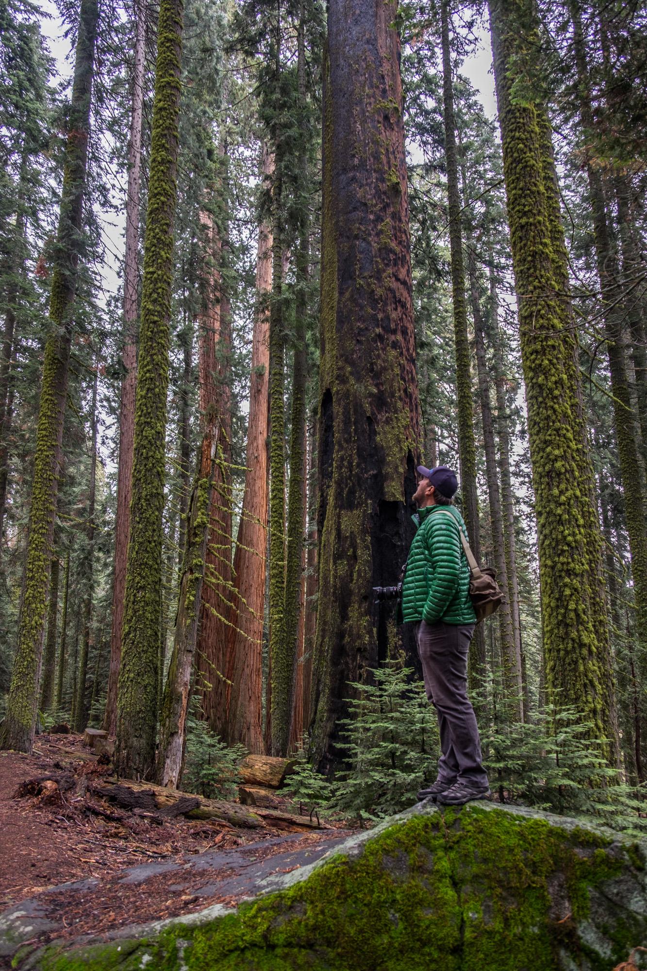 Sequoia National Park - 057.jpg