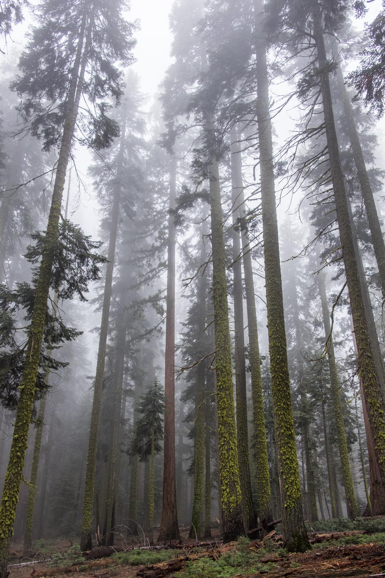 Sequoia National Park - 059.jpg
