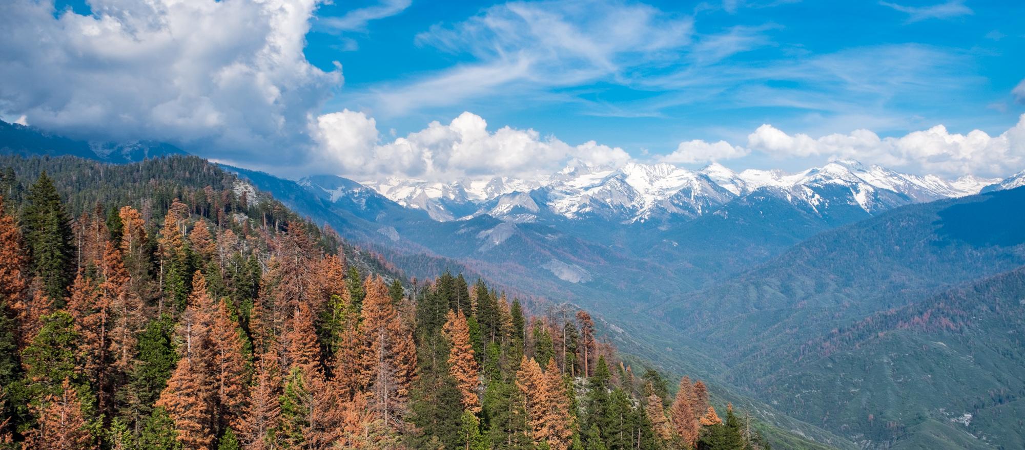 Sequoia National Park - 065.jpg