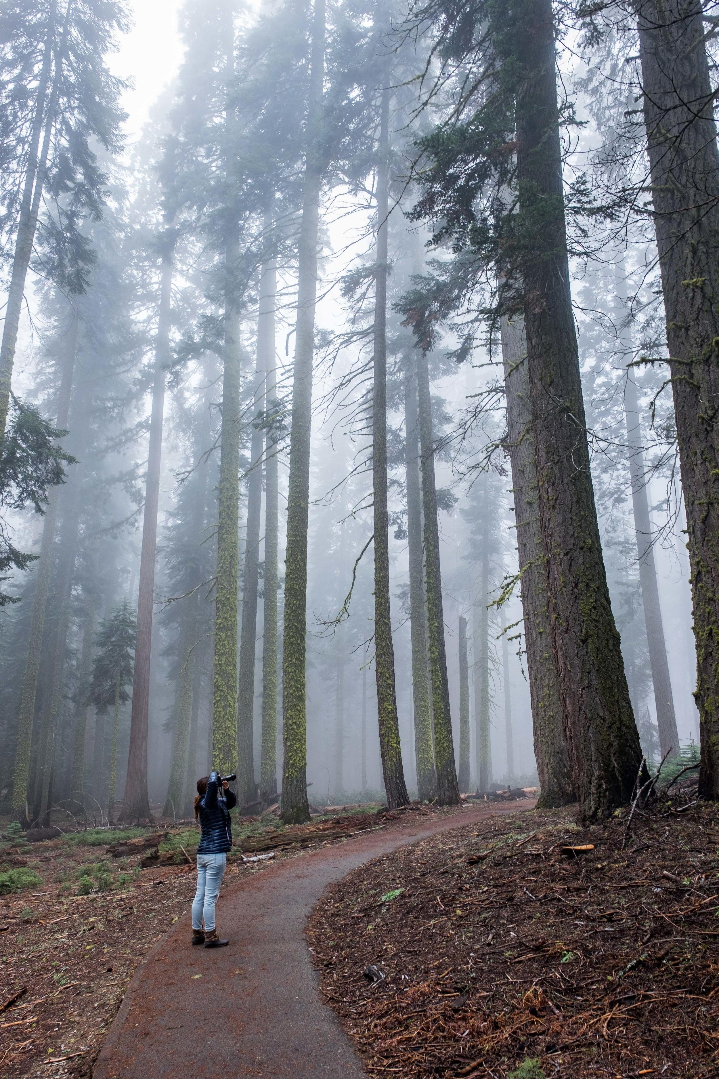 20160508-JI-Sequoia National Park-_DSF9761.jpg