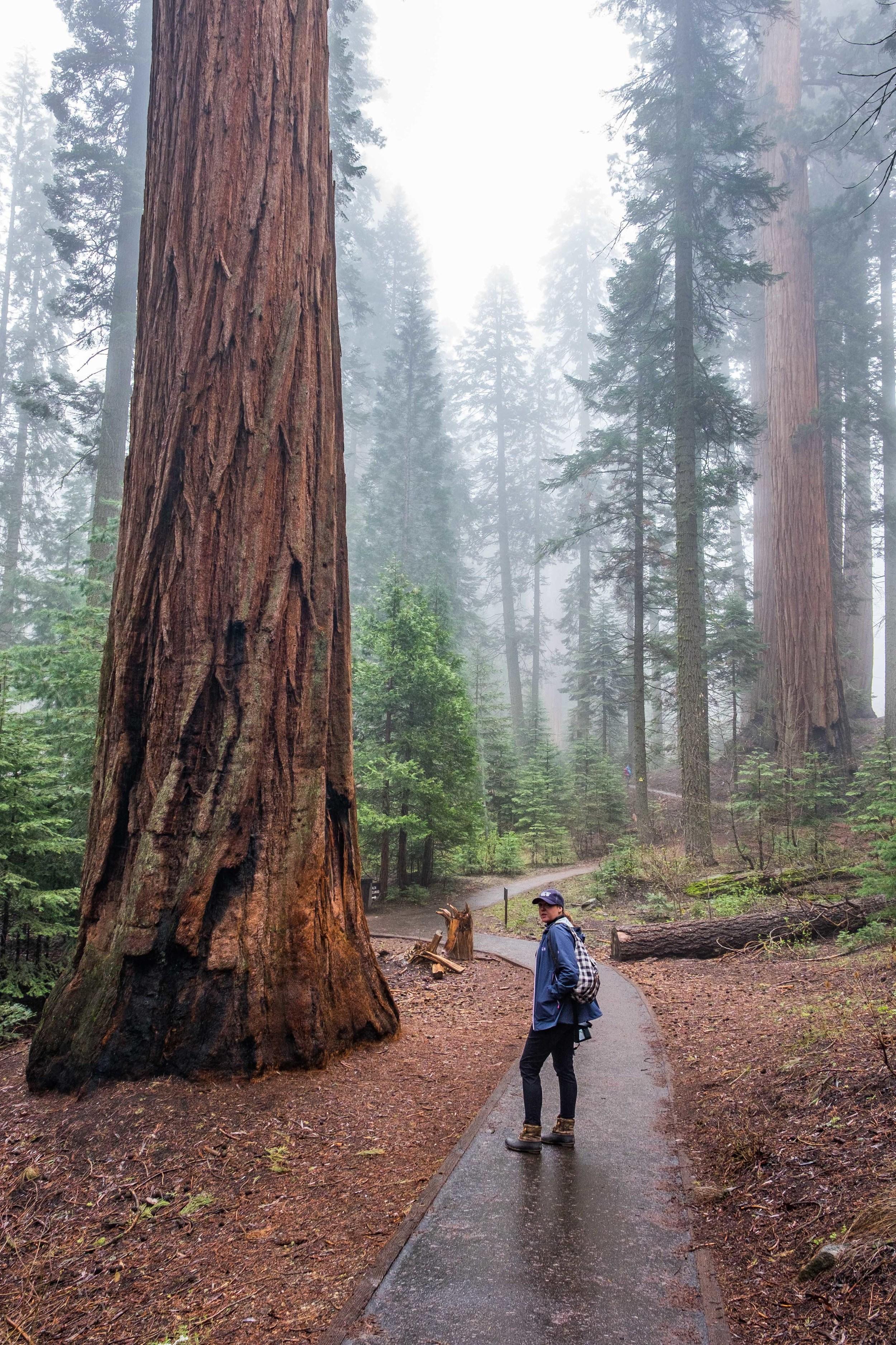 20160507-JI-Sequoia National Park-_DSF9309.jpg